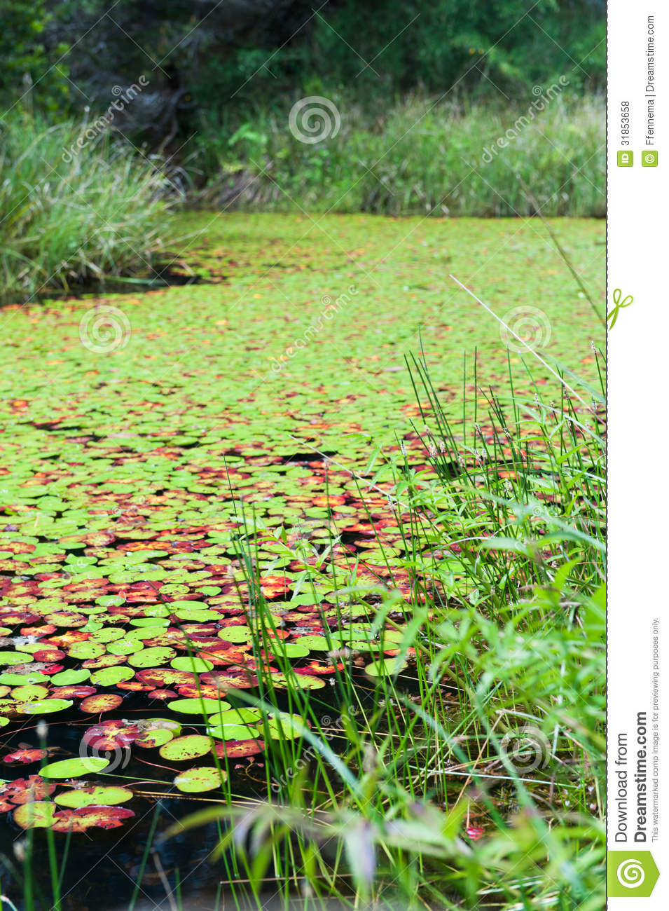 ... similar stock images of ` Lily pads almost cover a lake completely: dreamstime.com/royalty-free-stock-photos-lily-pads-cover-lake...