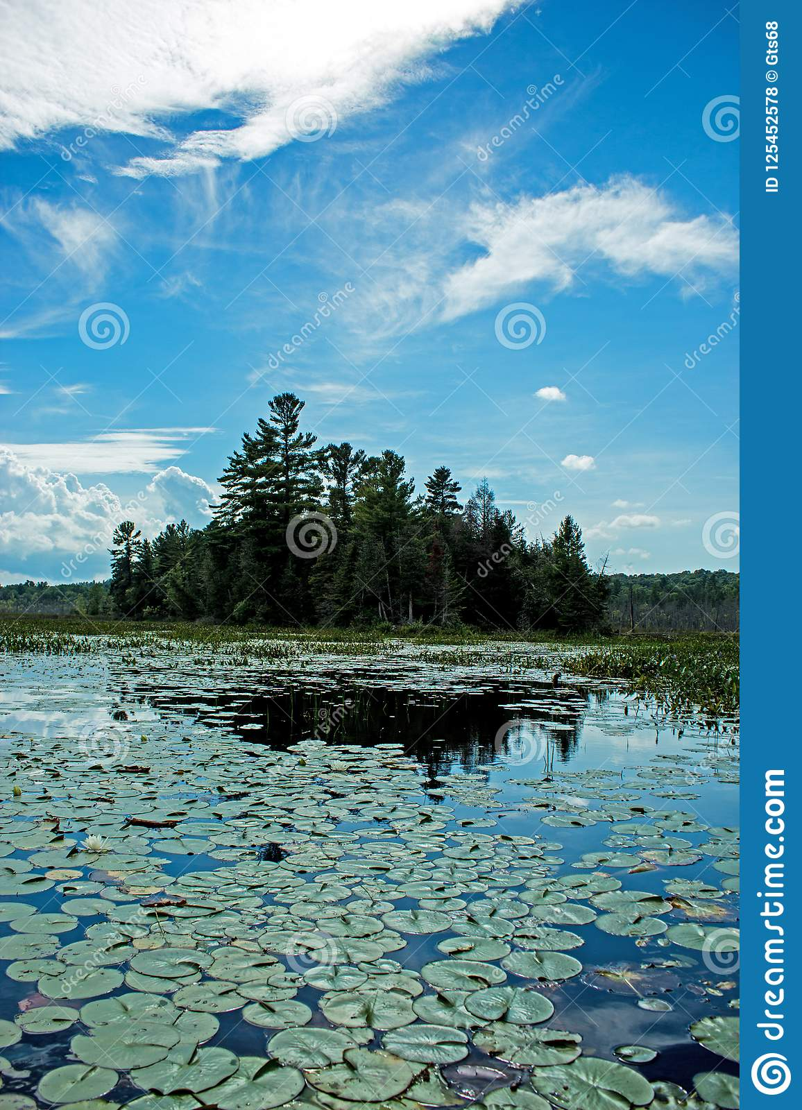 Lily Pads Lead To A Peninsula Covered In Pine Trees