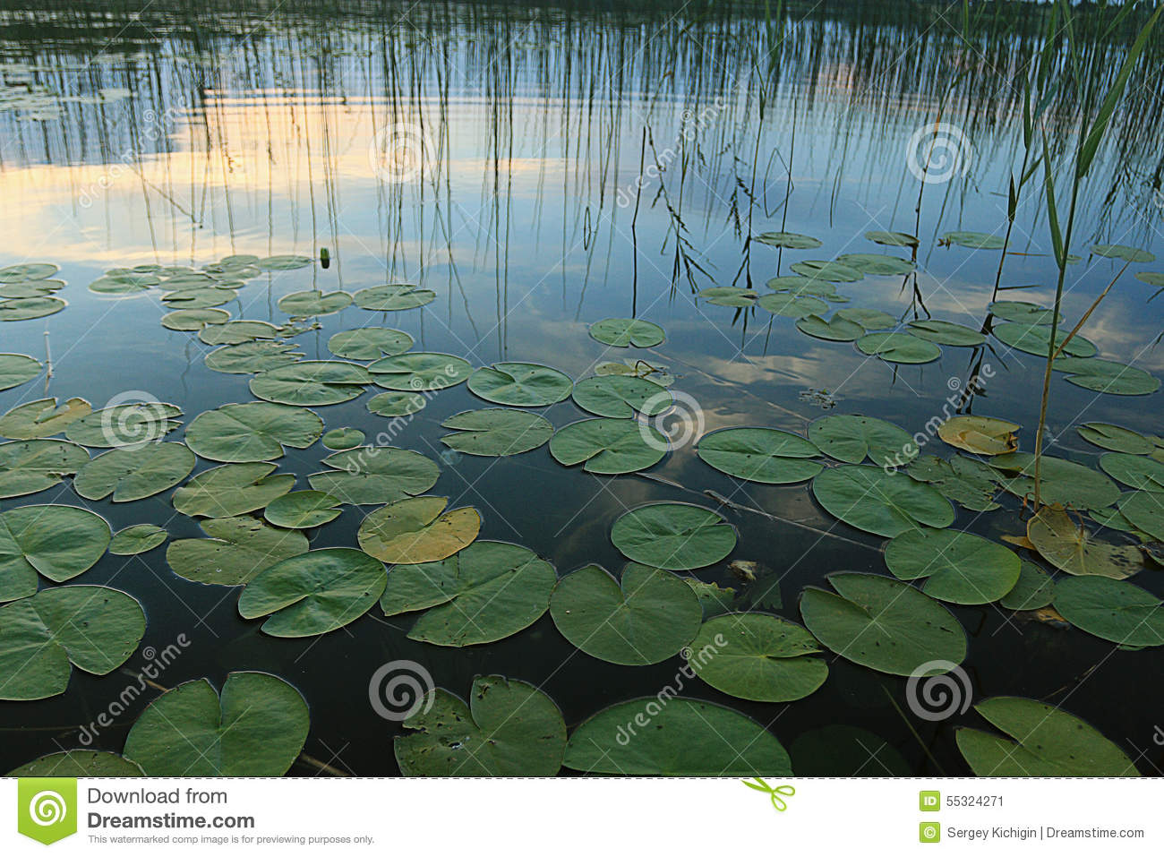 Lily pond stock image 8010529 for Pond dealers