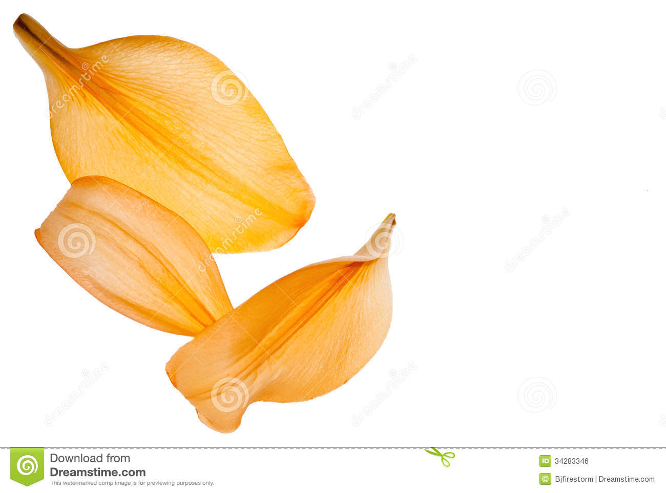 lily petals stock photo image of background fall nature 34283346