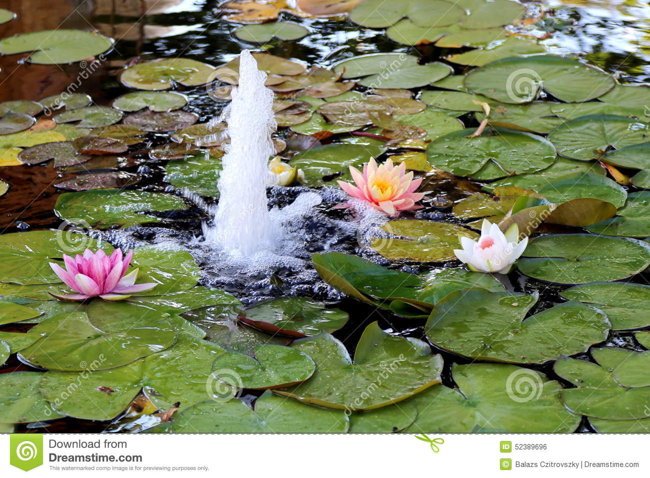 Lily pond with fountain stock photo image 52389696 fountain dhlflorist Images