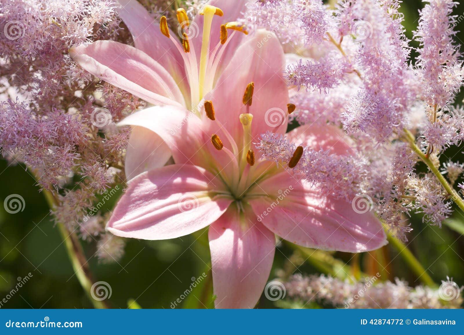 Lily Princess Flora Stock Photo Image Of Petals Lily 42874772