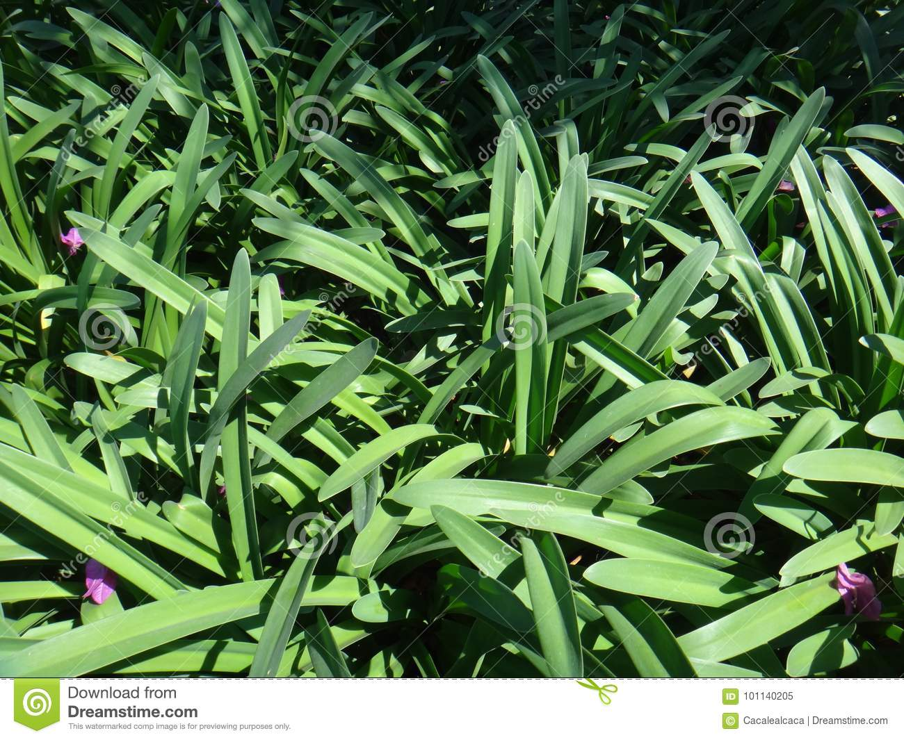Ornamental Plant Foliage Stock Image Image Of Backyard 101140205