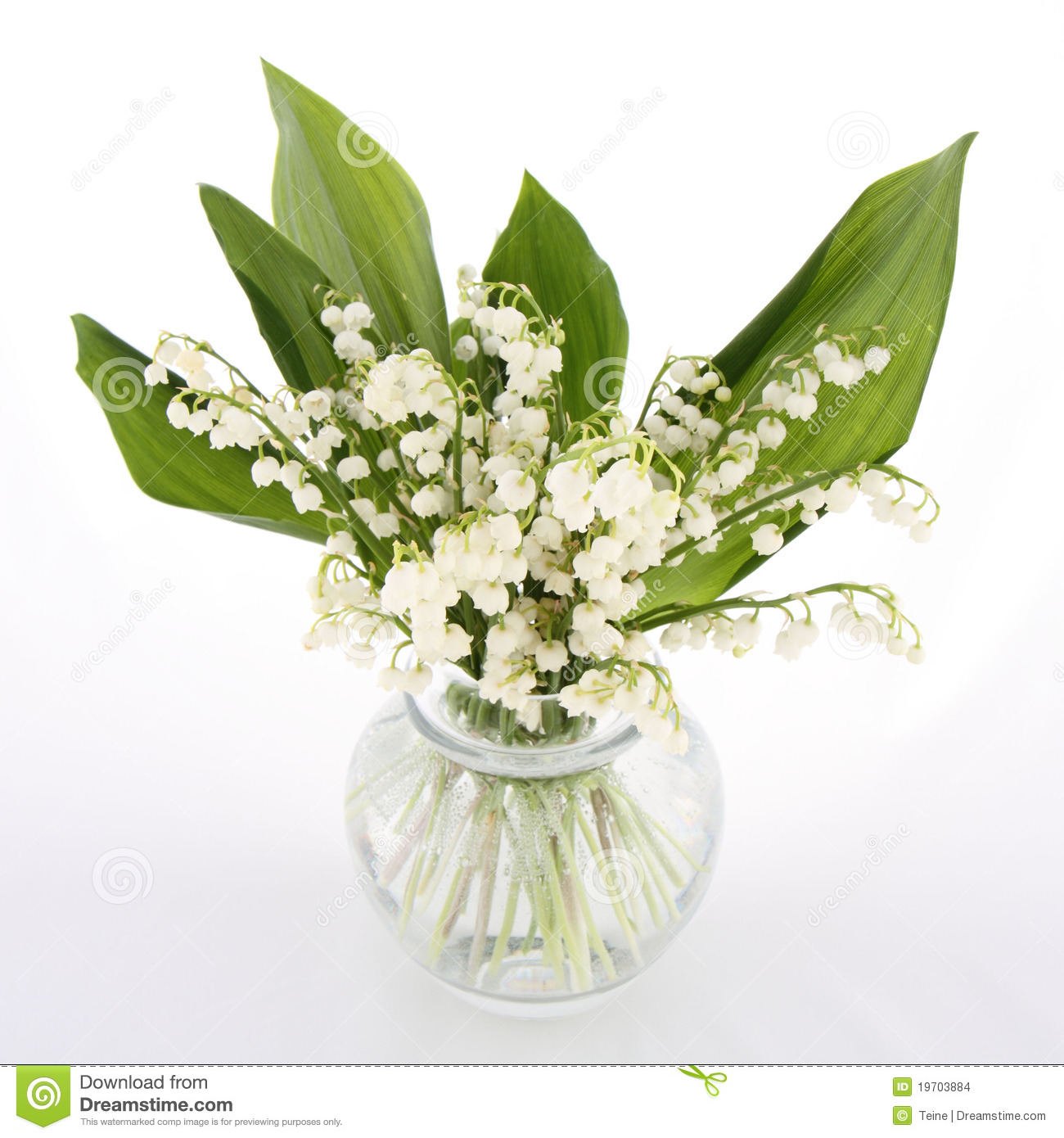 How Poisonous Is Lily of the Valley?