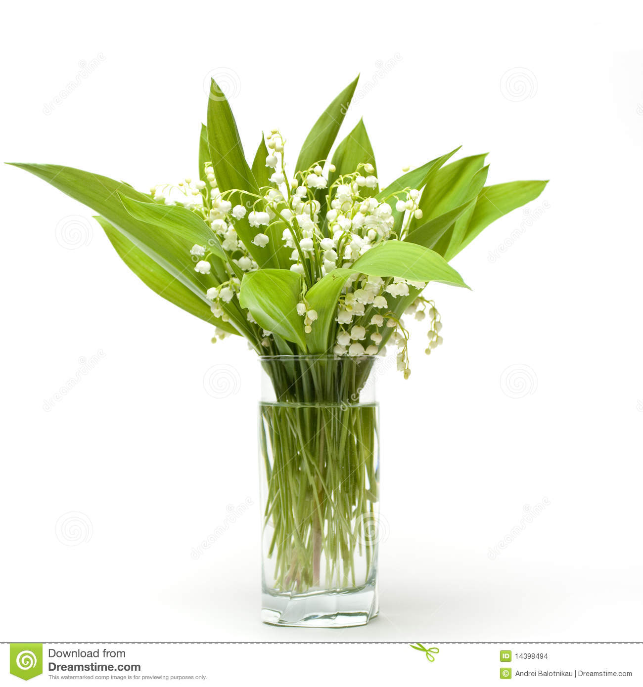 Lily Of The Valley Bouquet: Lily-of-the-valley Bouquet Stock Images