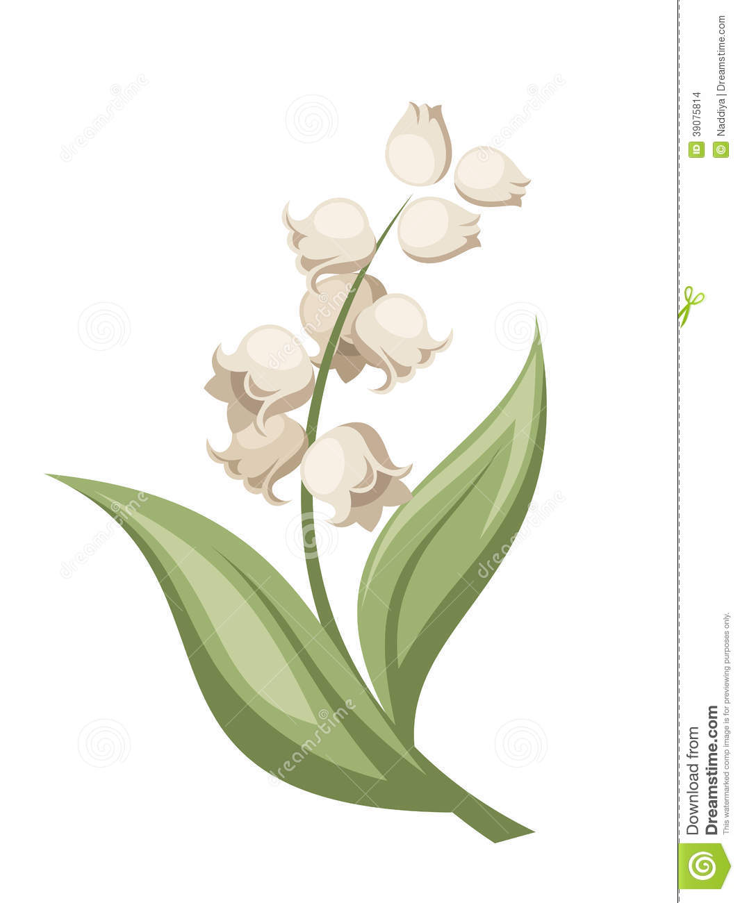 Lily of the valley flower vector illustration stock vector download lily of the valley flower vector illustration stock vector illustration of flora izmirmasajfo