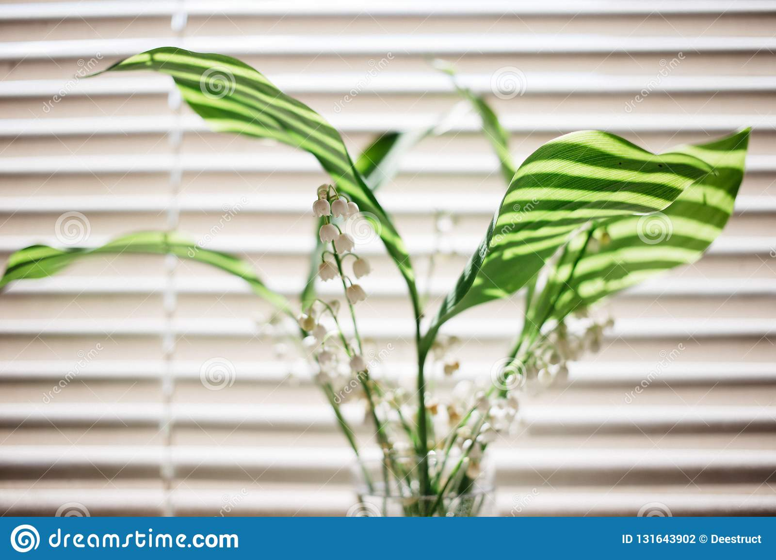lily of the valley flowers bouquet on the background of blinds