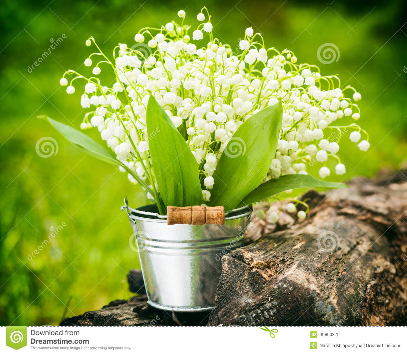 Lily of the valley flowers in bucket in forest stock photo image lily of the valley flowers in bucket in forest izmirmasajfo Choice Image