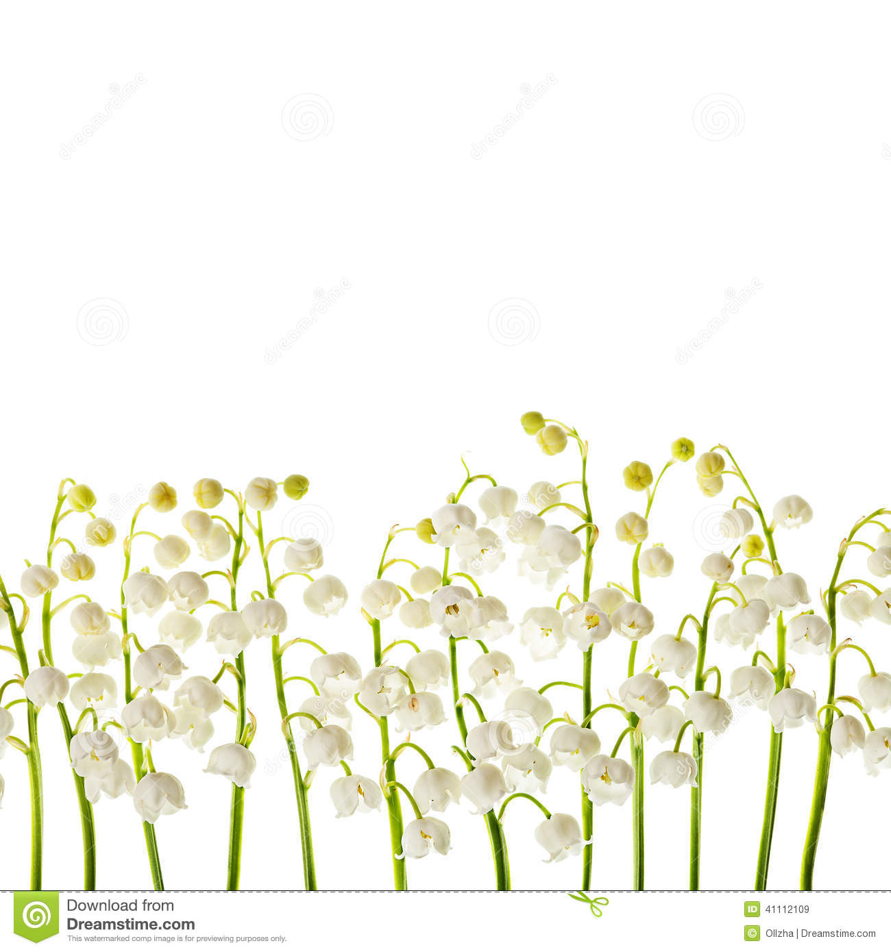 Lily of the valley flowers isolated border background stock image lily of the valley flowers isolated border background izmirmasajfo