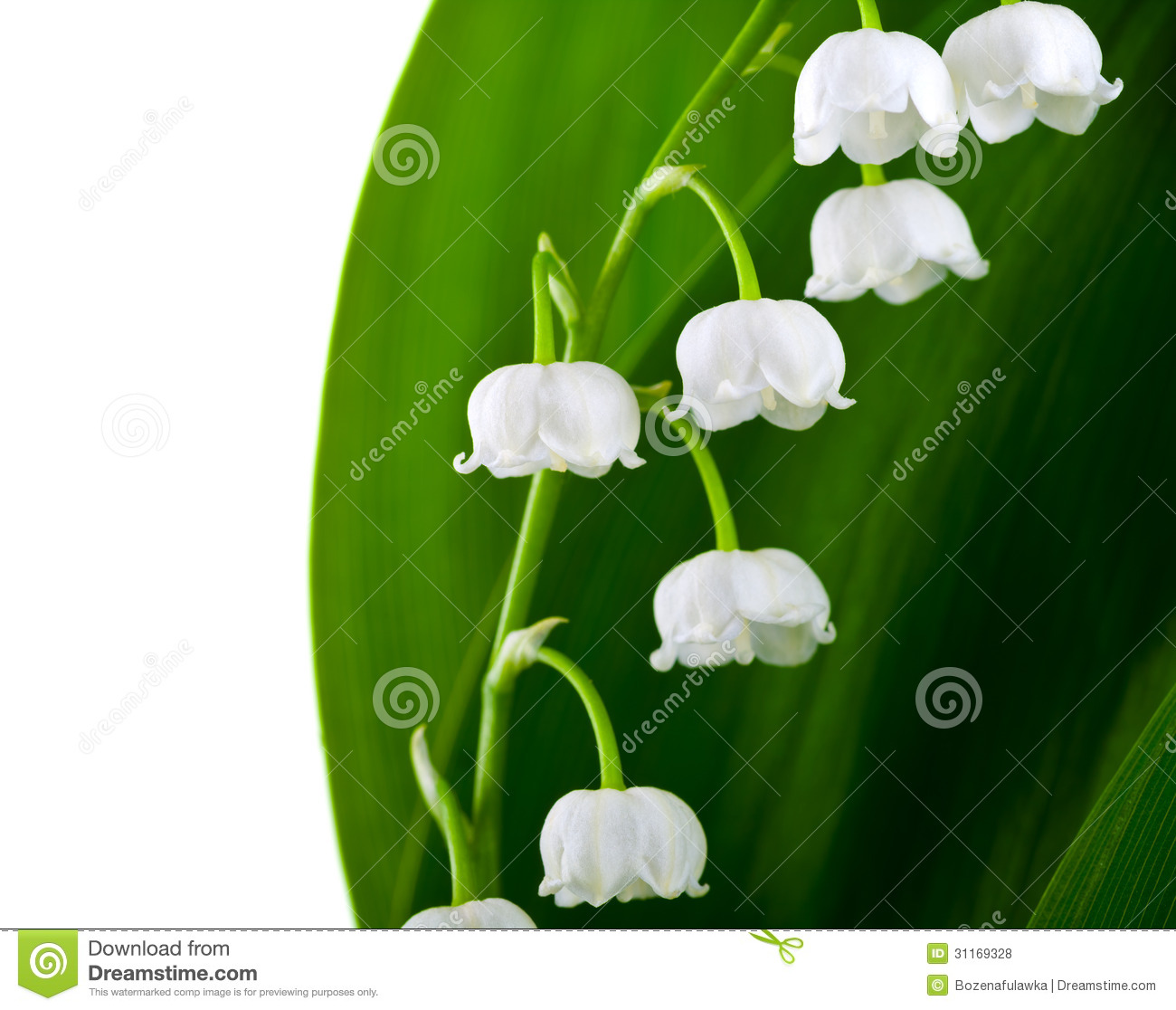 Lily of the valley stock photo image of valley convallaria 31169328 lily of the valley izmirmasajfo Choice Image