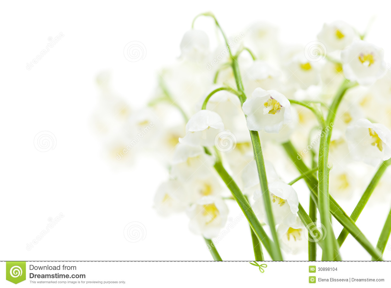 Lily Of The Valley Flowers On White Stock Photo Image Of Beautiful