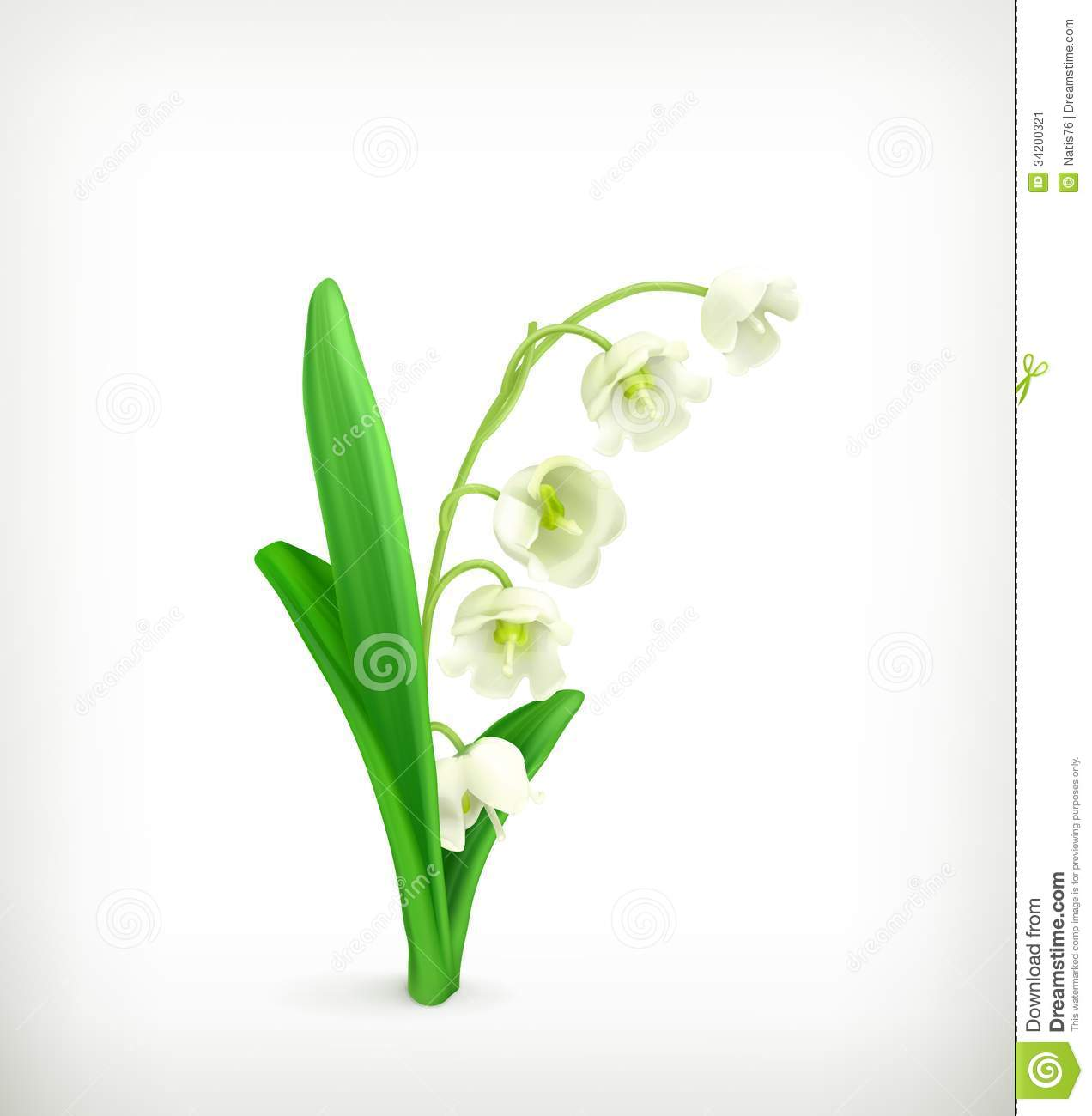 Lily valley stock illustrations 1670 lily valley stock lily of the valley illustration on white background stock image izmirmasajfo