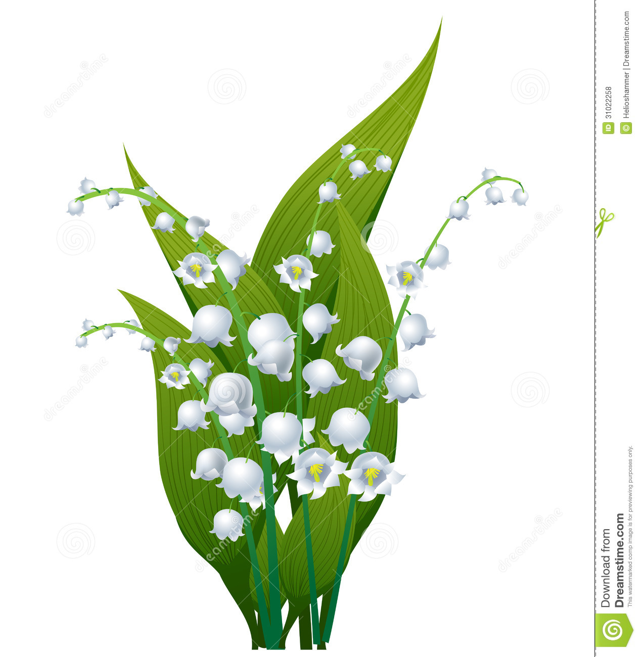 Lily of the valley stock vector. Illustration of floral ...
