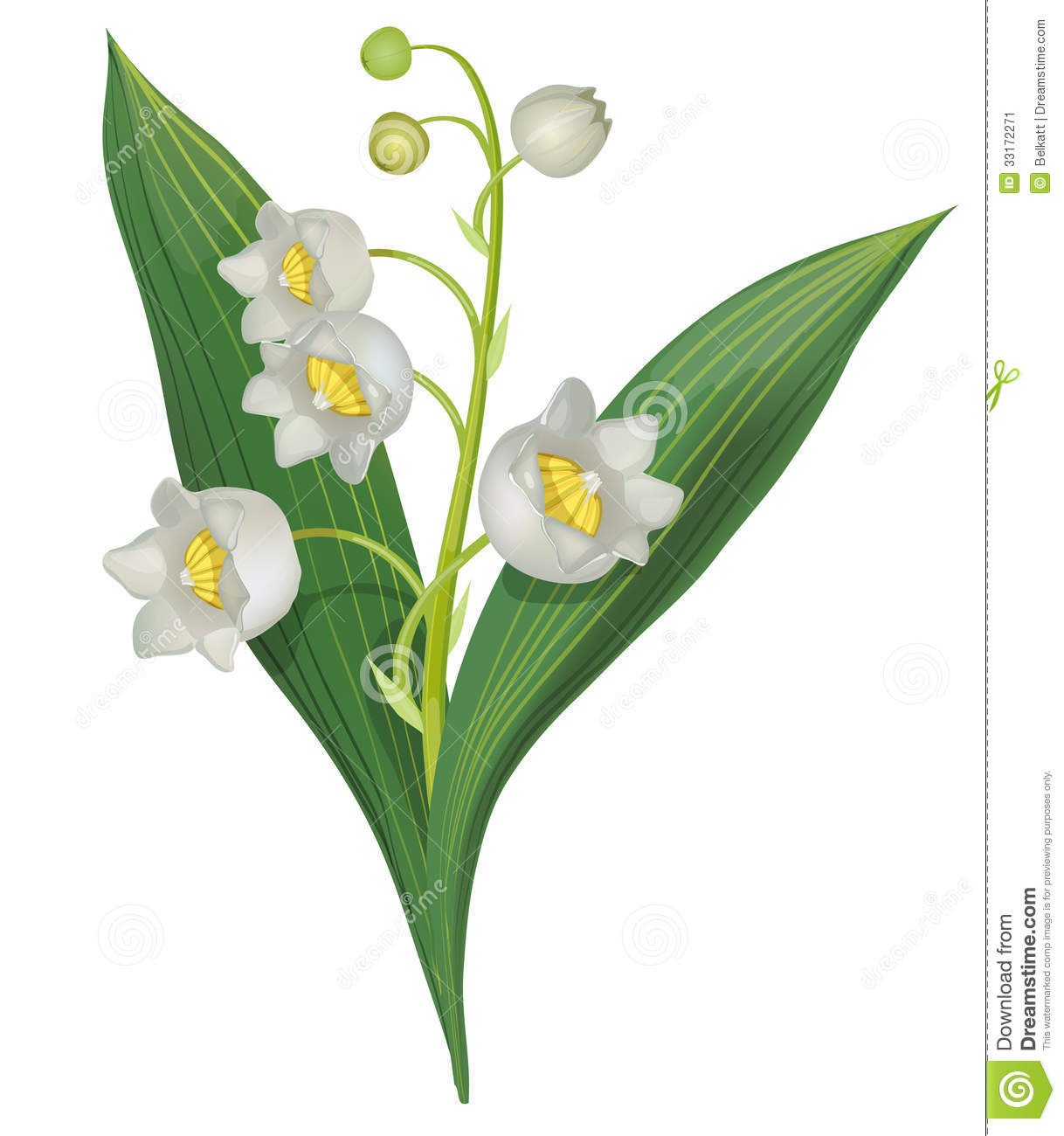 Lily of the valley stock vector. Illustration of flora ...