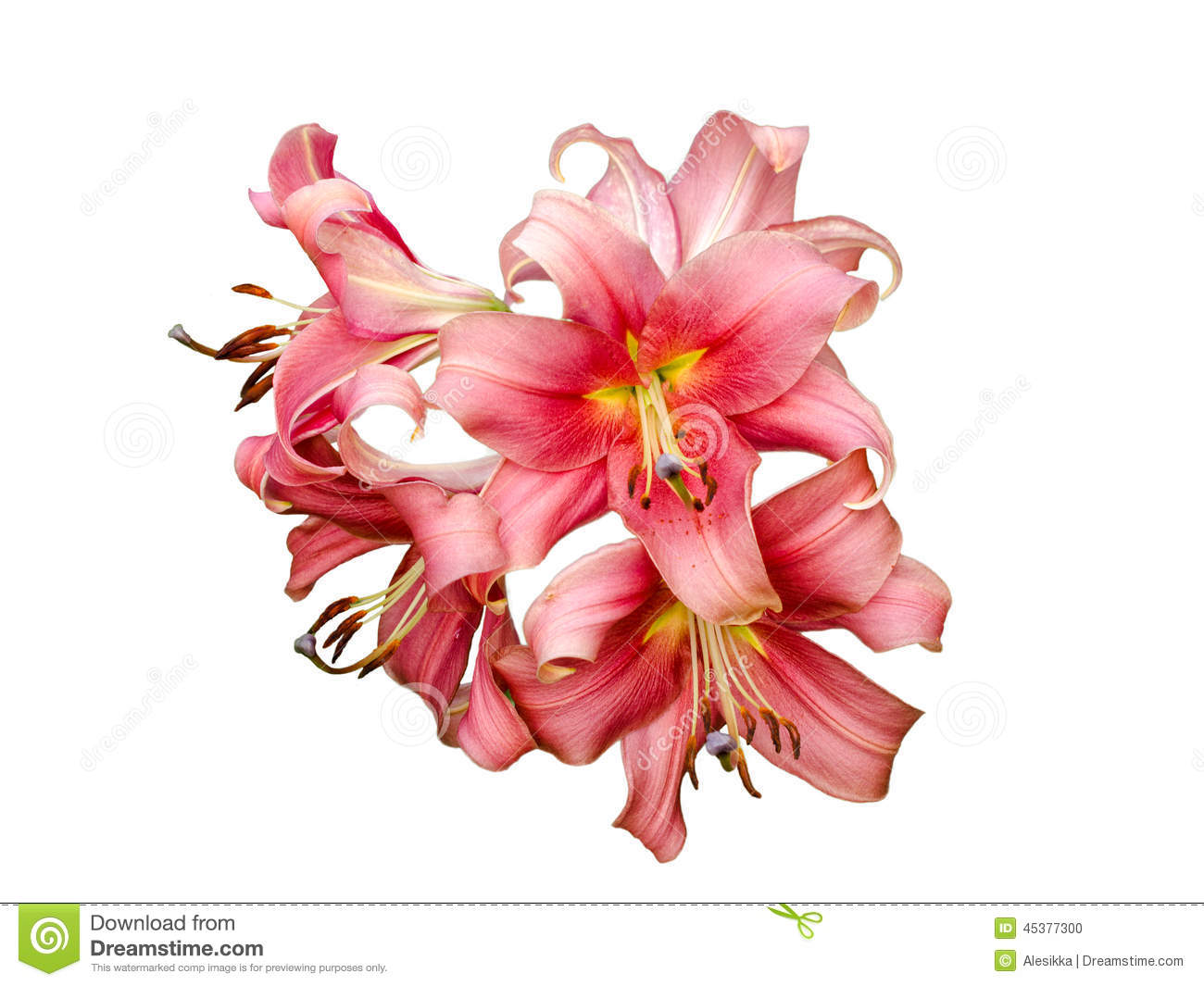 Lily varieties flowers stock photo image of beautiful 45377300 lily varieties flowers izmirmasajfo