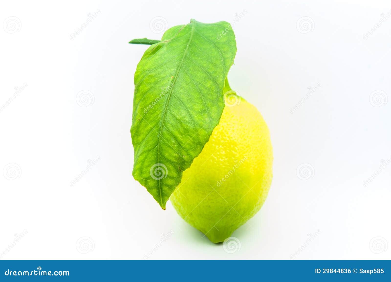 Limão cultivado em casa