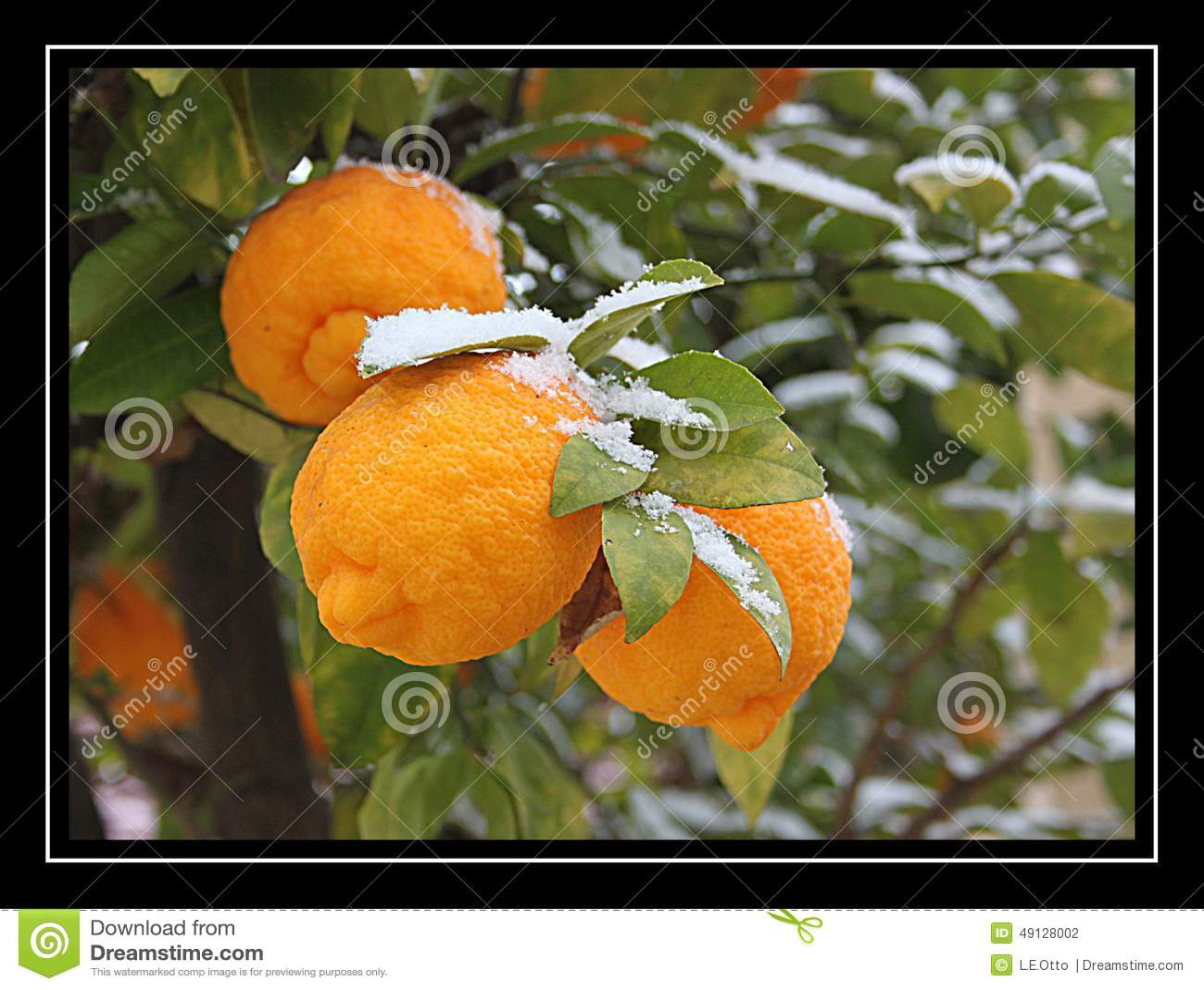 Limón en nieve