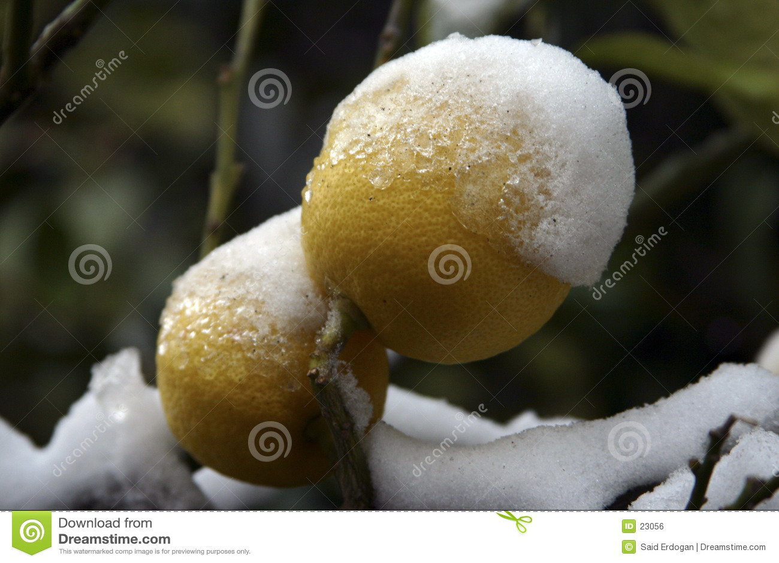 Limón frío II