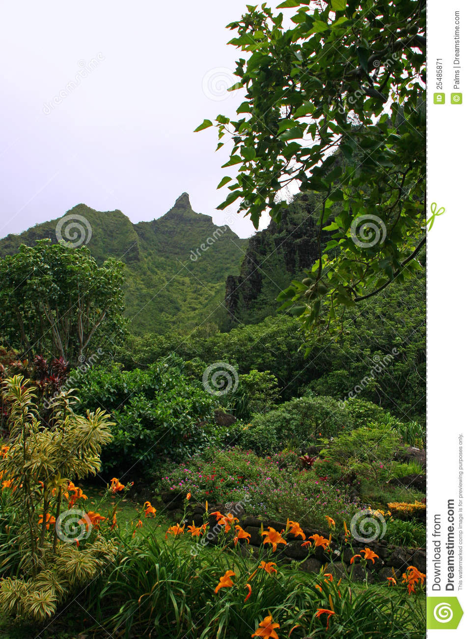 Limahuli Garden And Preserve Stock Image Image 25485871