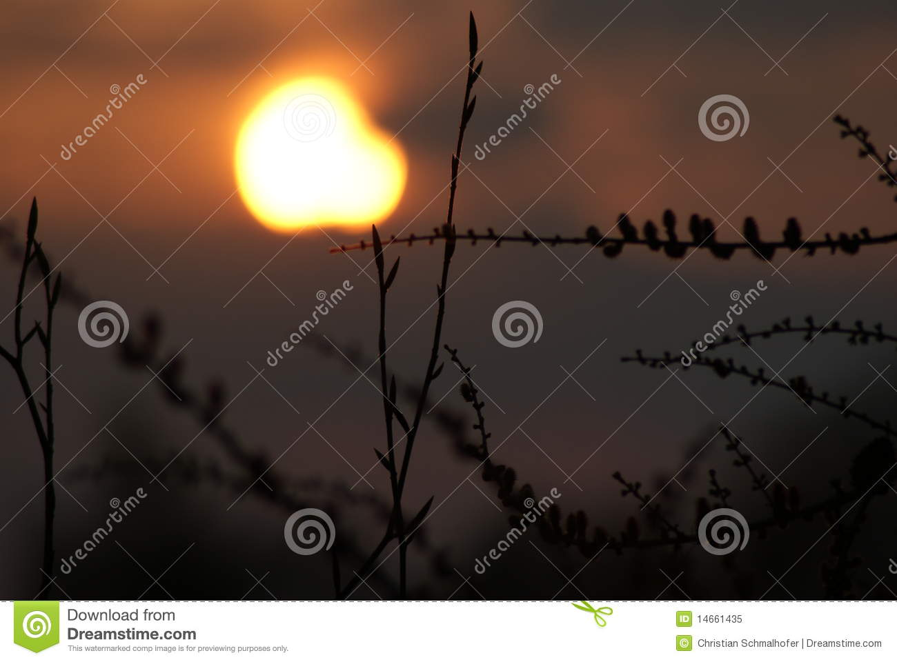 Limb in the Sunset