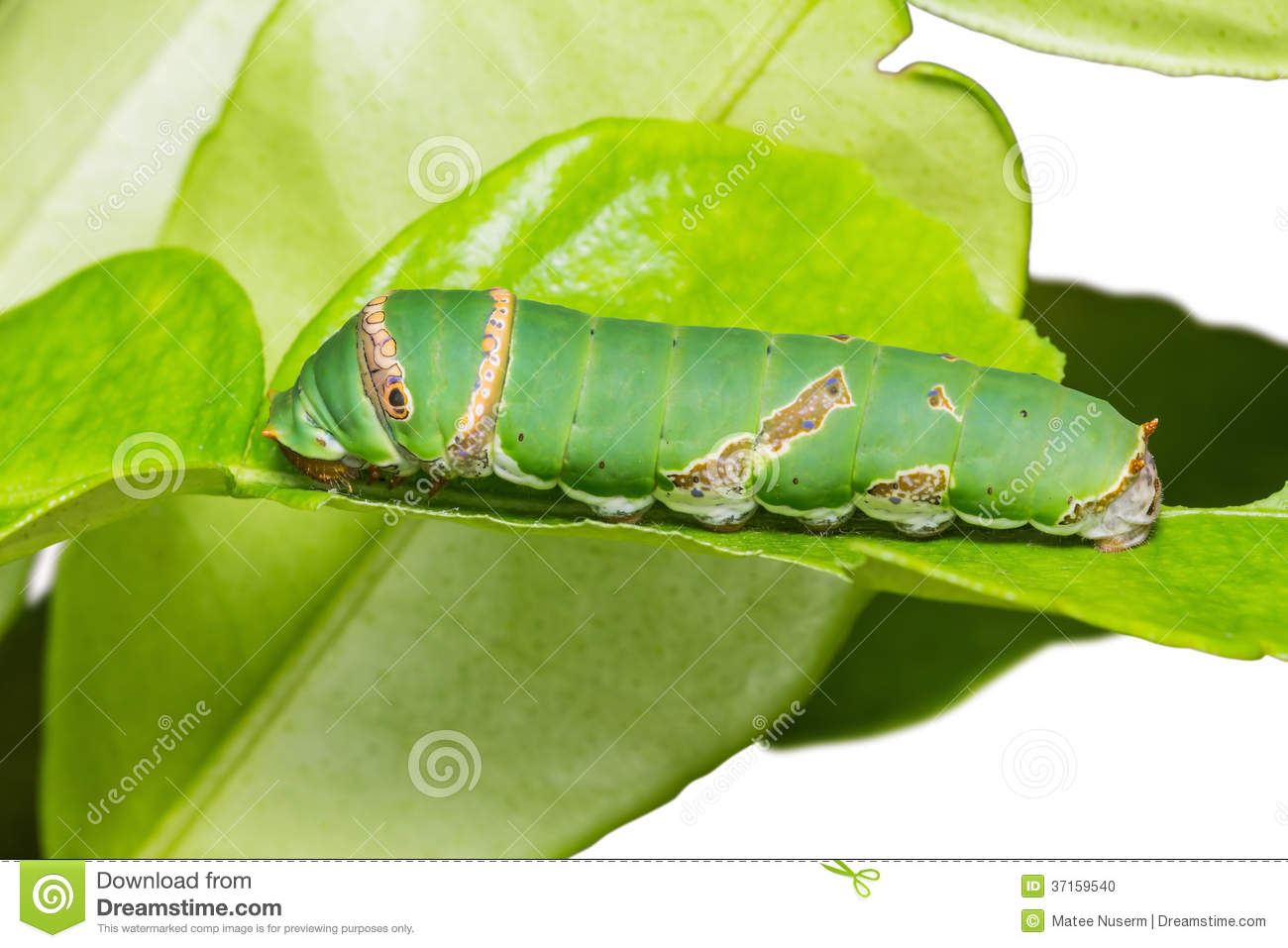 how to become a caterpillar dealer
