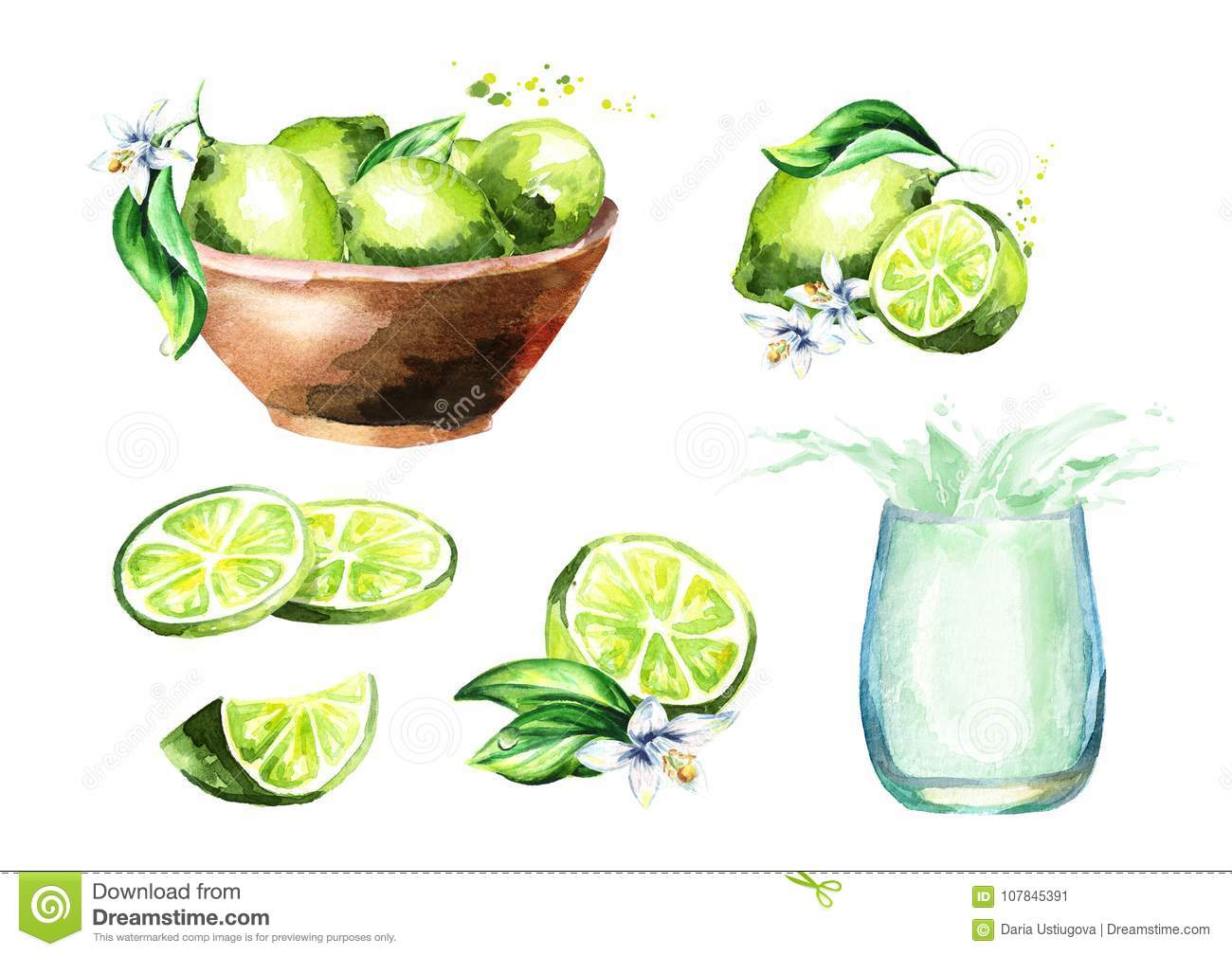 Lime set. Watercolor hand drawn illustration.