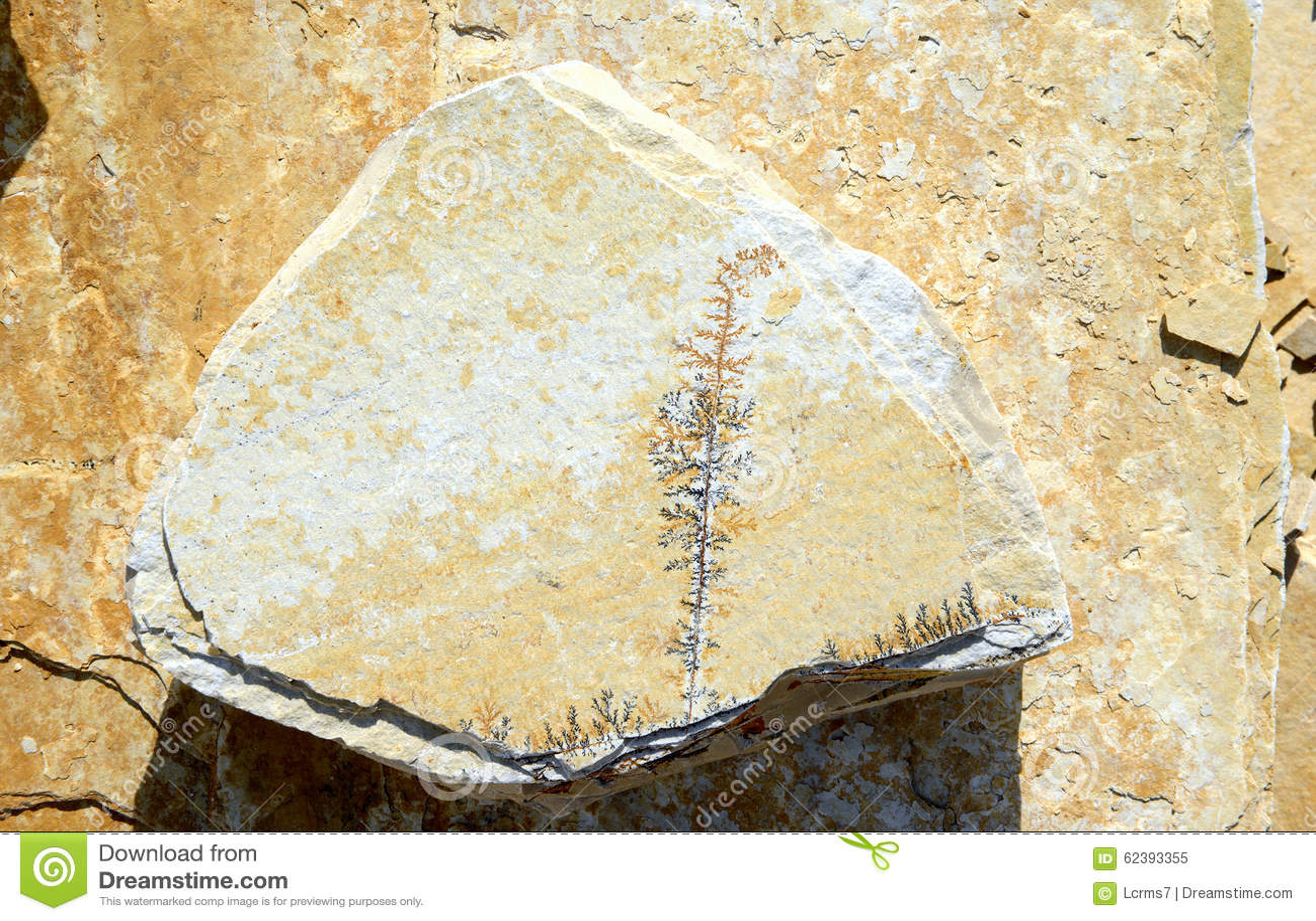 1000  images about fractalic dendrites: agates, cabochons, stones ...