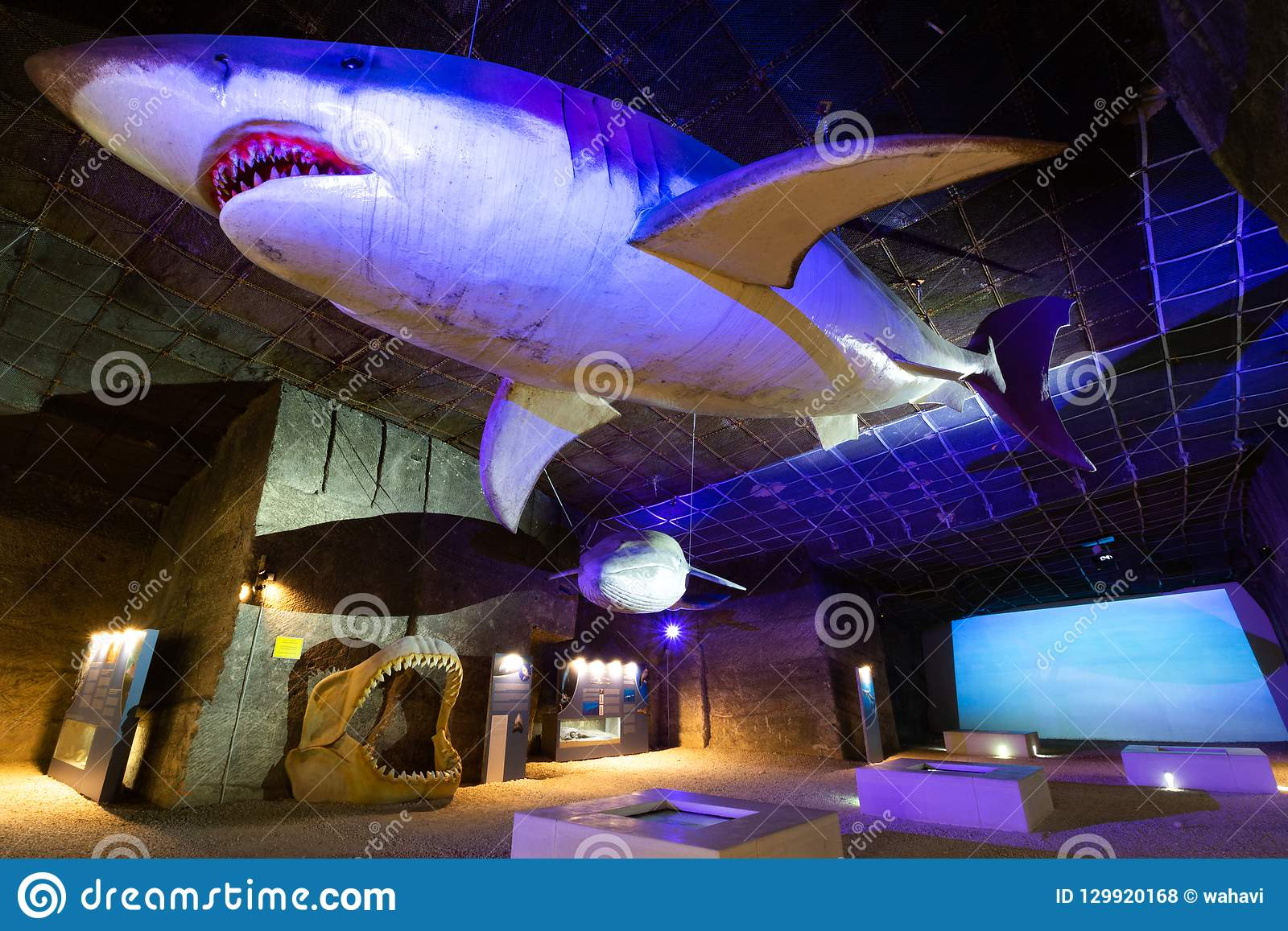 Life-size Megalodon editorial stock photo  Image of deep