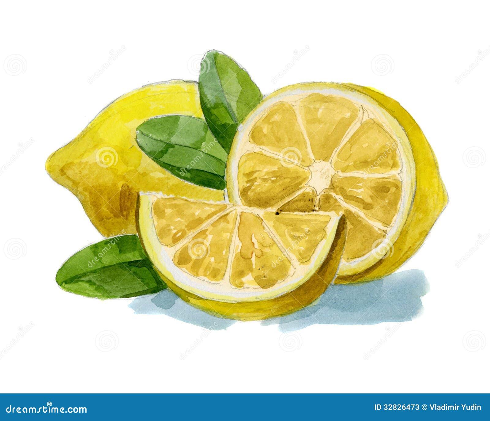 Limone disegnato a mano dell 39 acquerello fotografie stock - Foglie limone nere ...