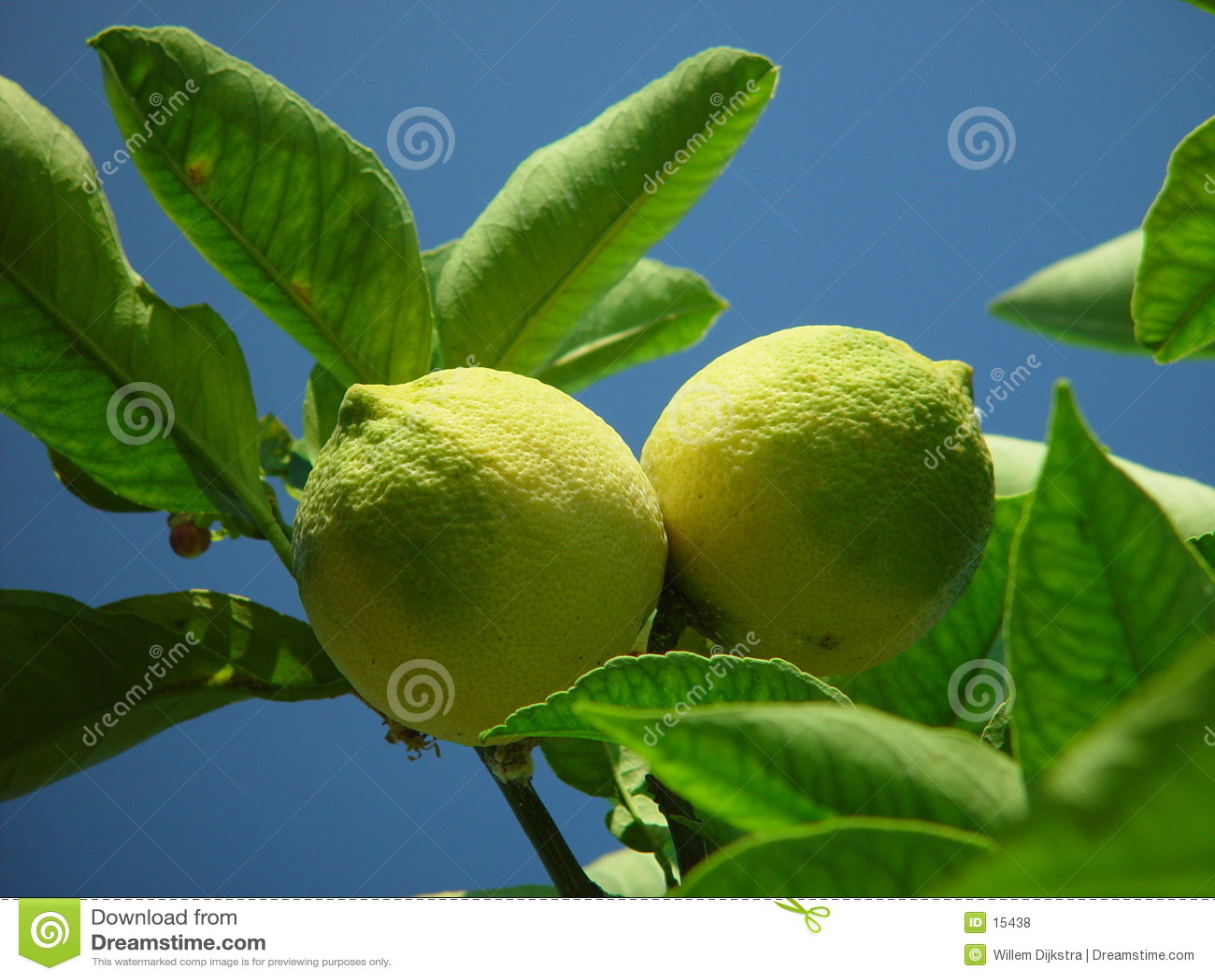 Limones