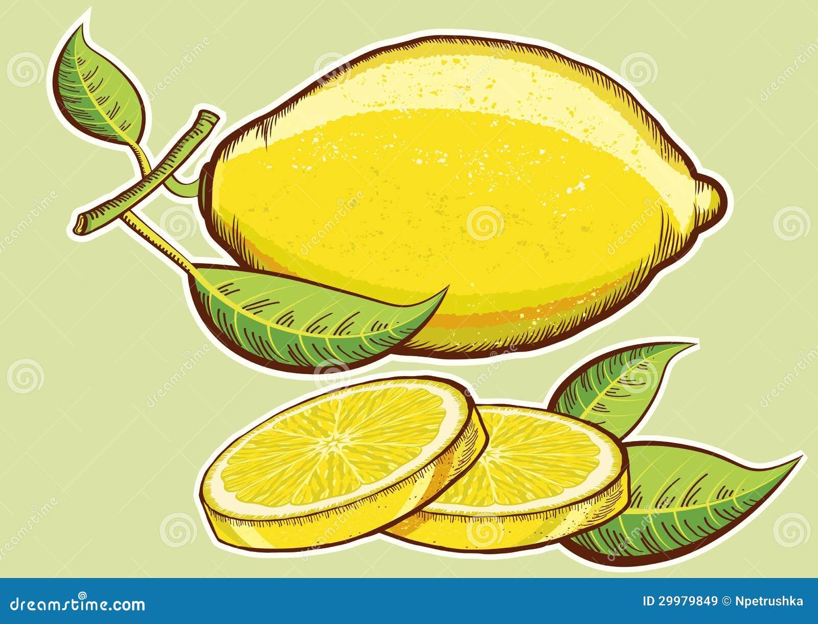 Limoni Disegno: Limoni Freschi Gialli Con Le Foglie Verdi Isolate