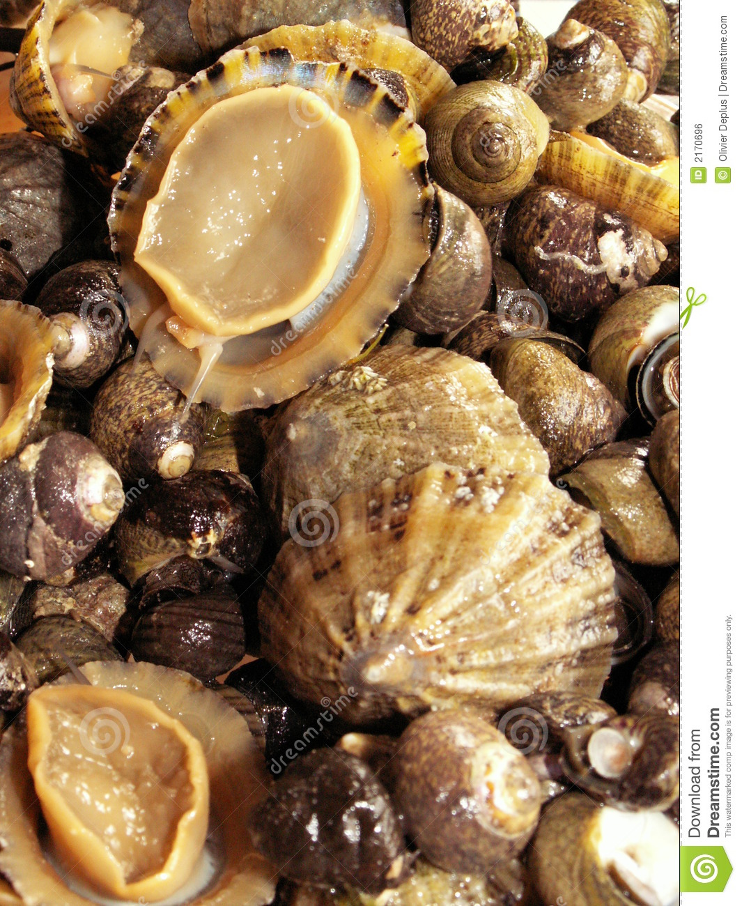 Limpets and periwinkles