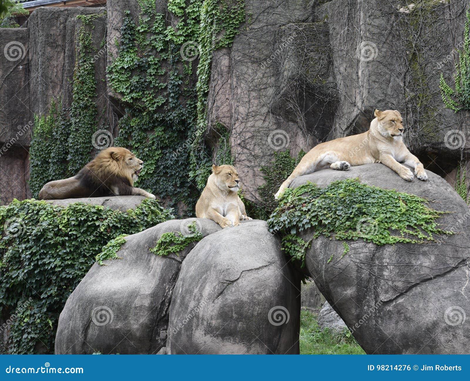 Lincoln Park Zoo Pride