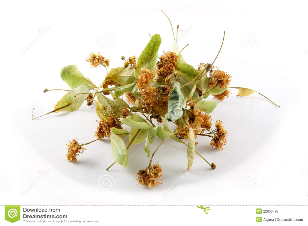 Linden Flower Tea Royalty Free Stock graphy Image