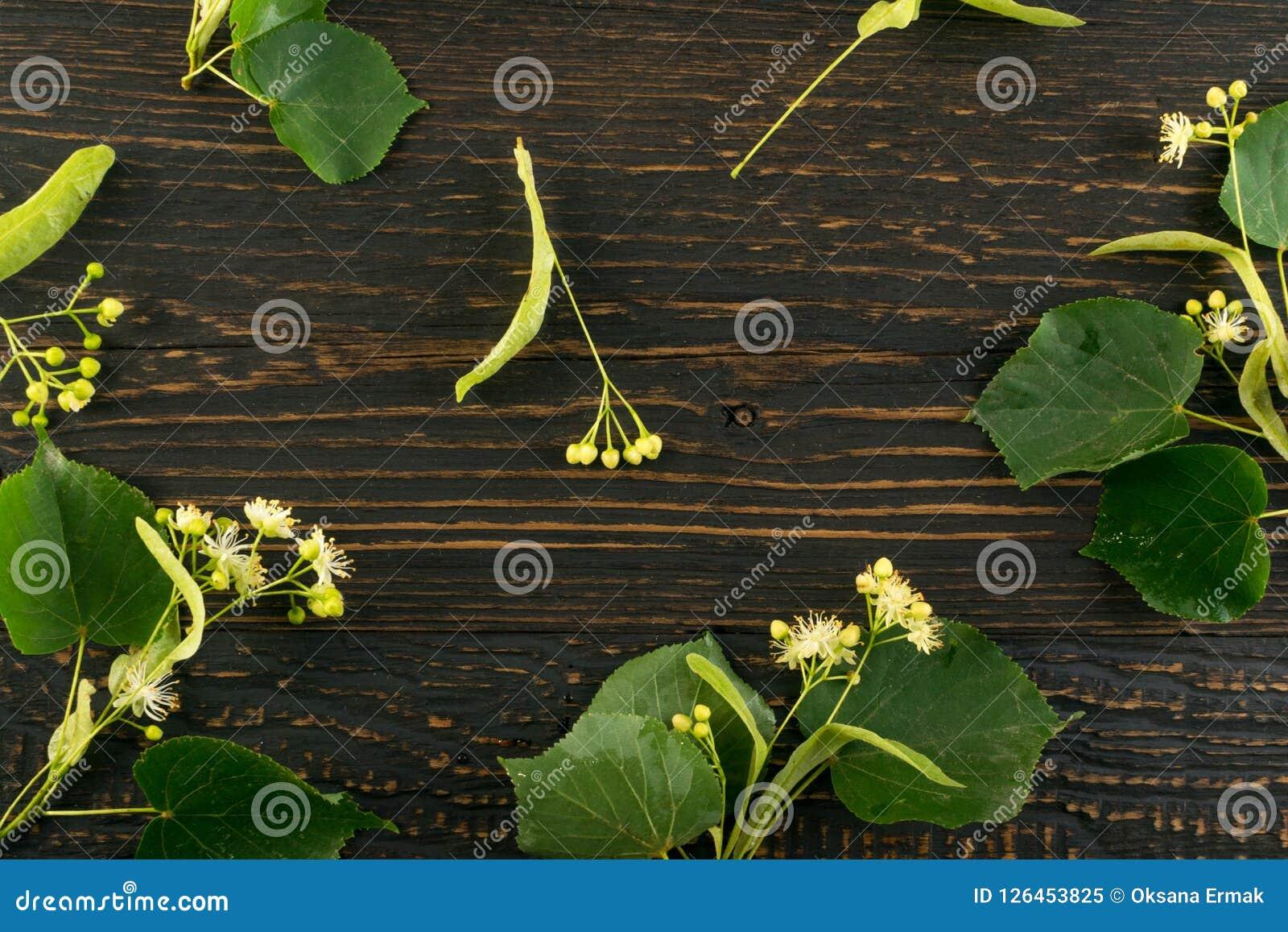 Linden Flowers Pattern