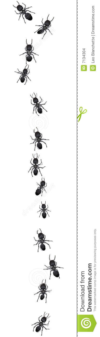 Line of ants on white