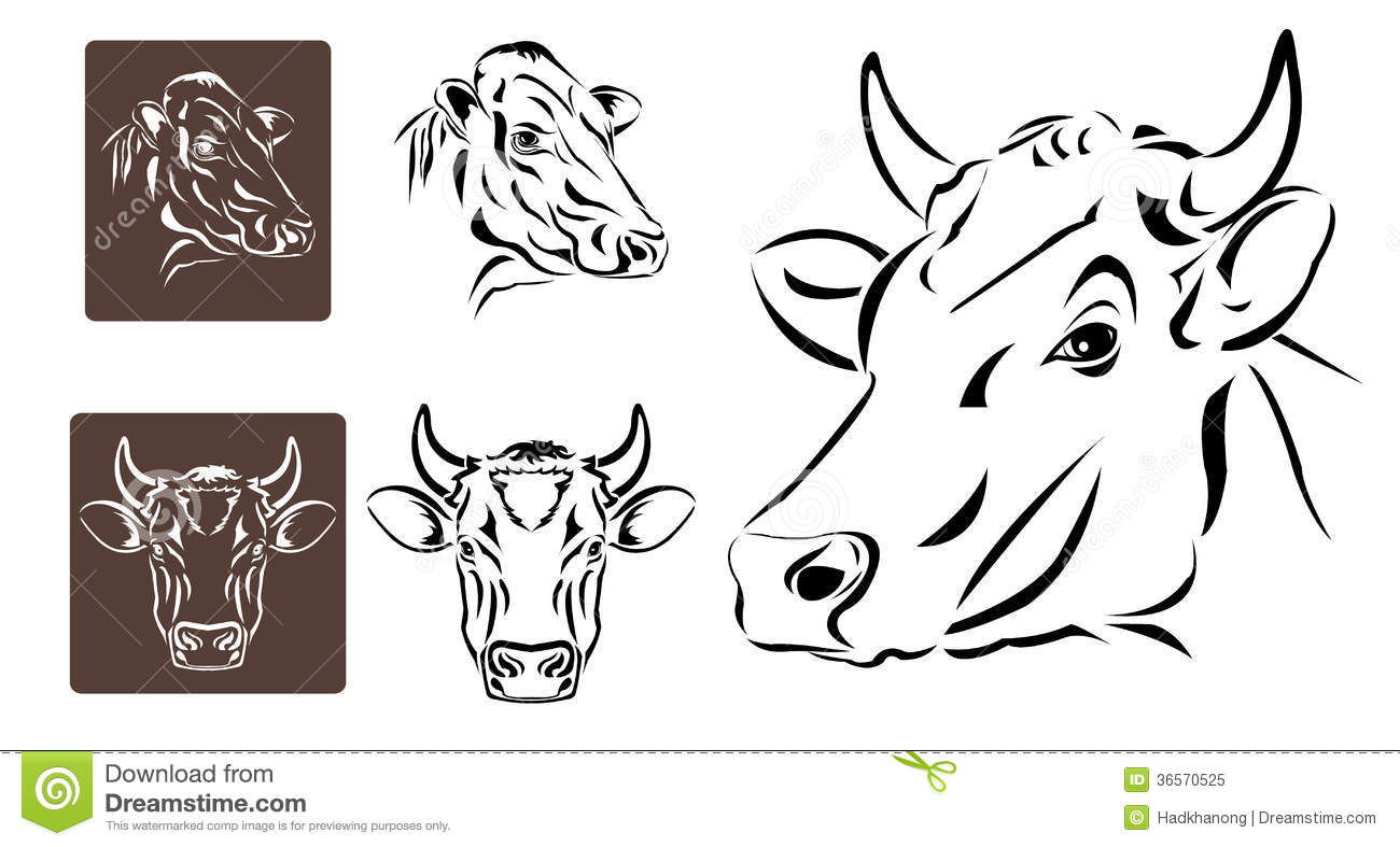 Line Art Royalty Free : Line art of cow s head royalty free stock photo image