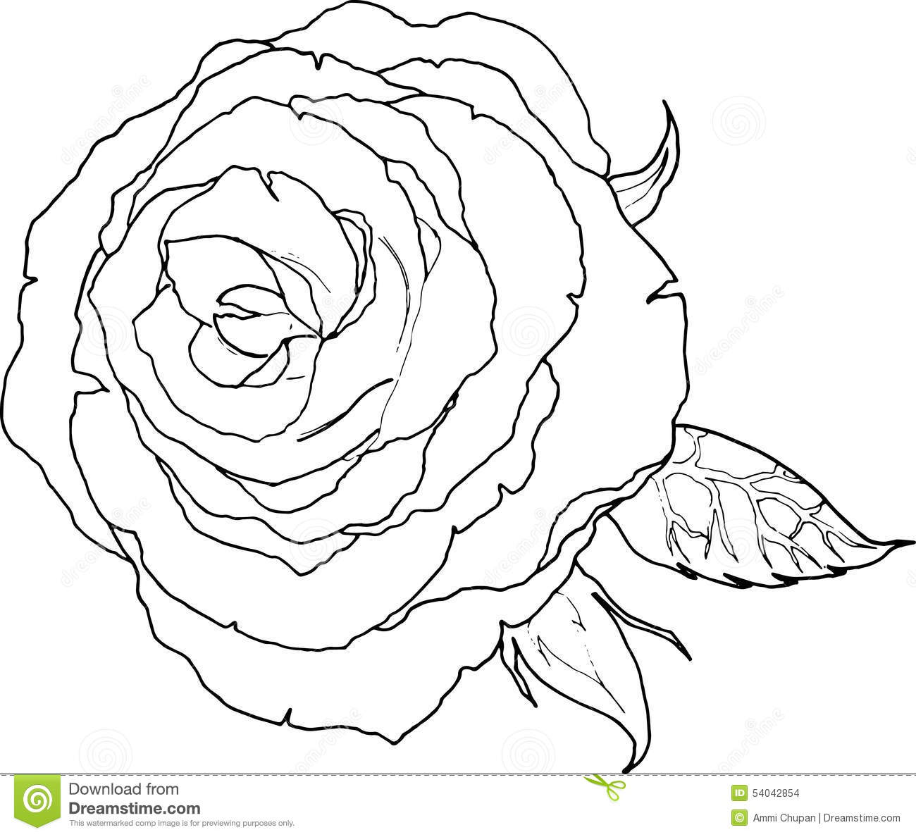 Line Art Drawing Of A Rose Flower Black And White Color Stock