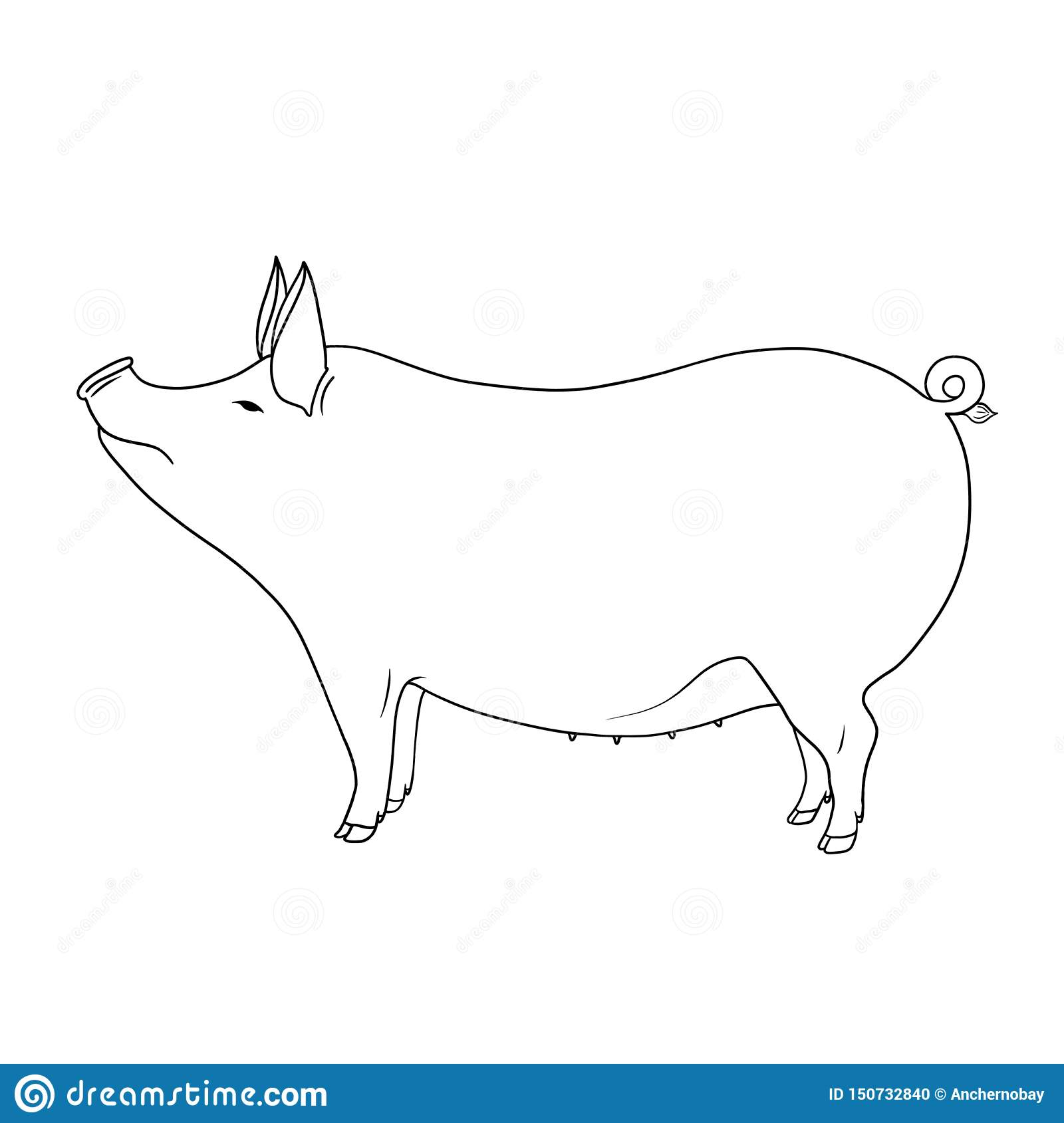 Line art farm animal cute pig hand drawn illustration isolated on white background