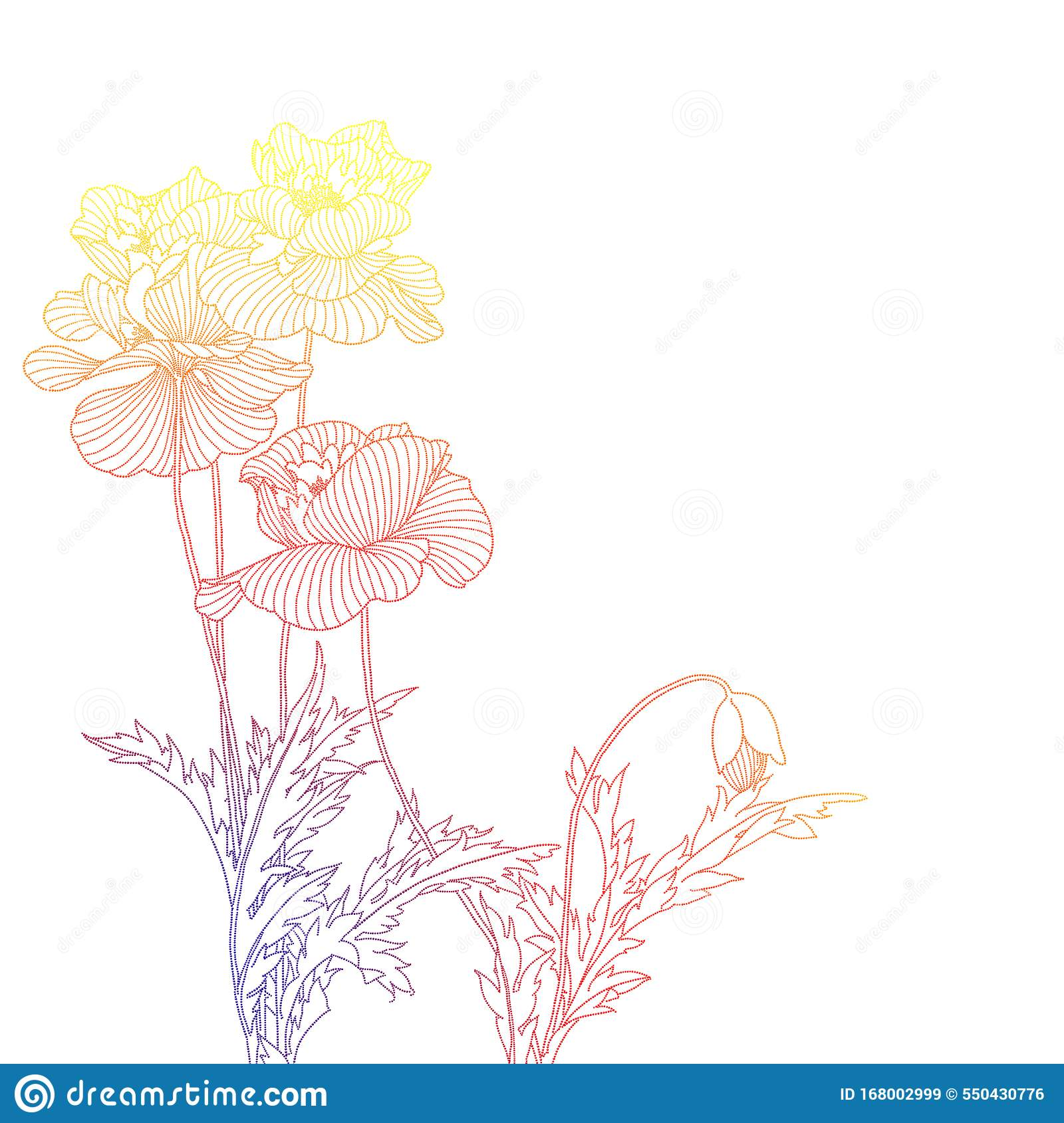 Line art with poppies stock image. Illustration of background ...