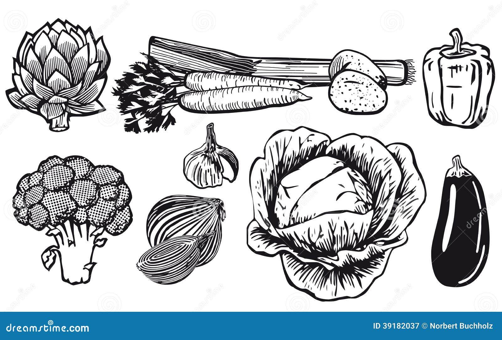 Line Art Vegetables : Line drawing of assorted vegetables stock vector image