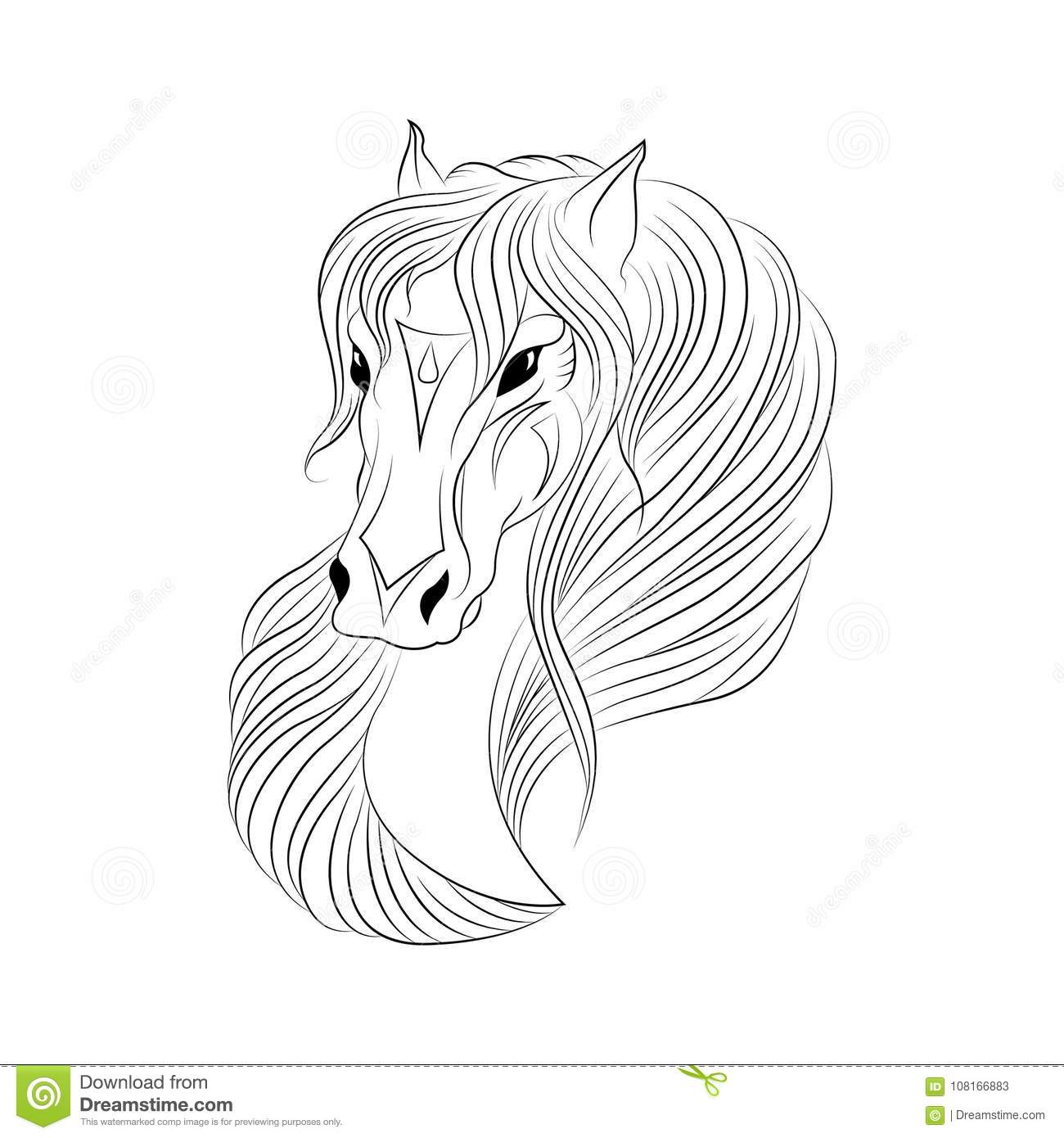 Line Drawing Of A Horse Head Stock Illustration Illustration Of Portrait Brush 108166883