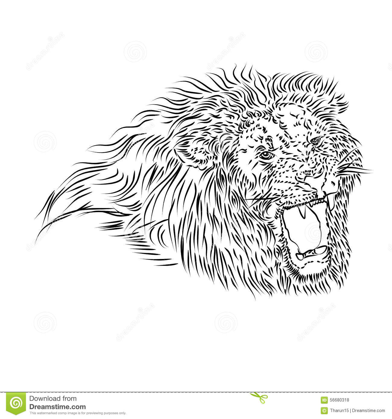 Line Drawing Of A Roaring Lion Stock Illustration ... - photo#32