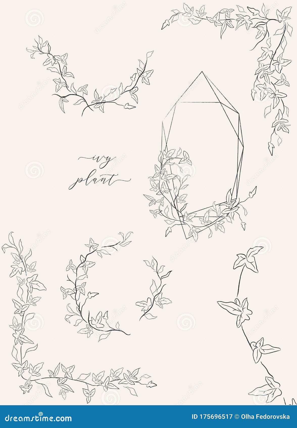 Line Drawing Vector Leaf Branch Wreaths Frames Stock Vector Illustration Of Branch Laurel 175696517