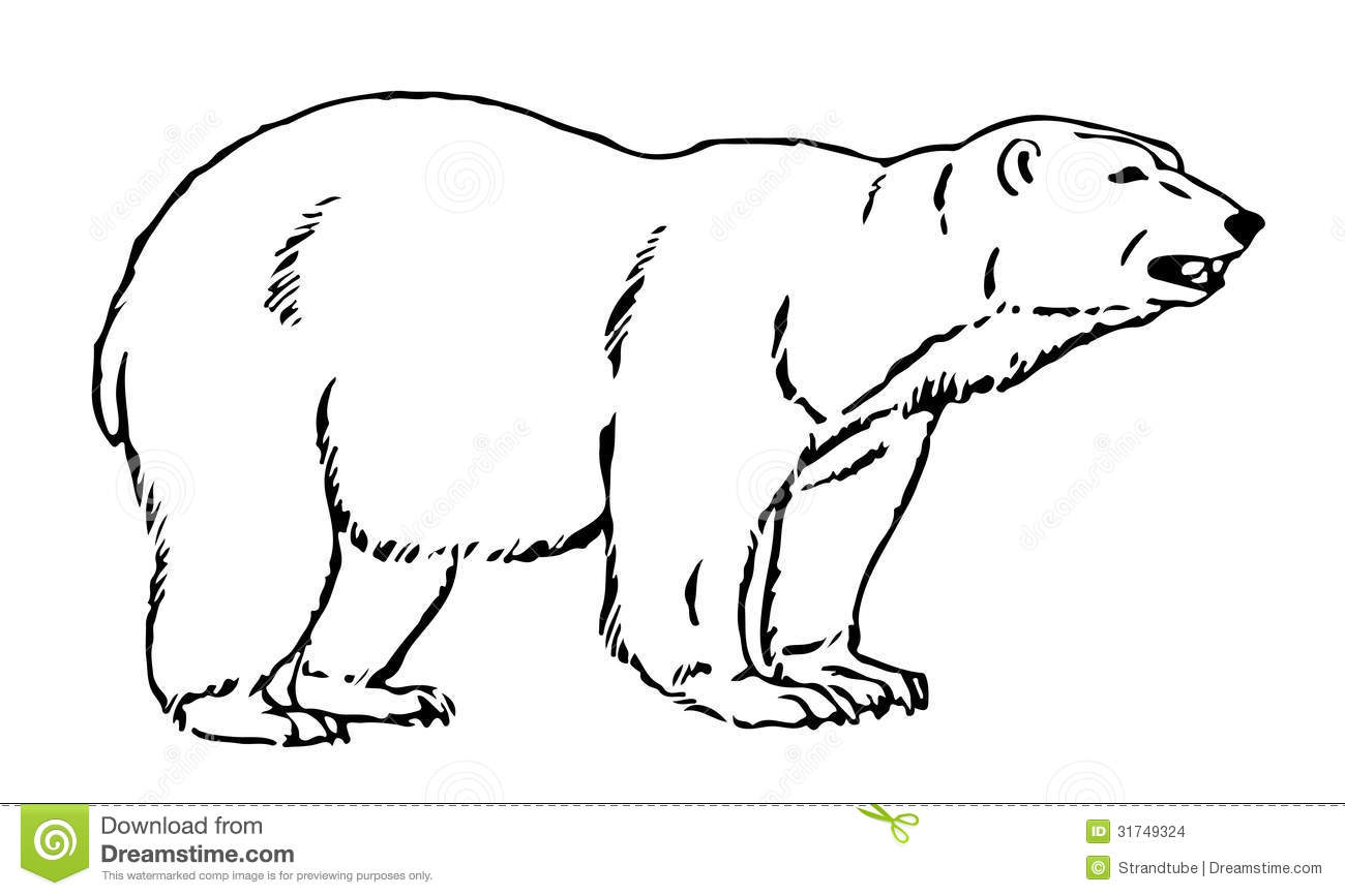 Line Drawing Bear : Line illustration of an artic bear stock