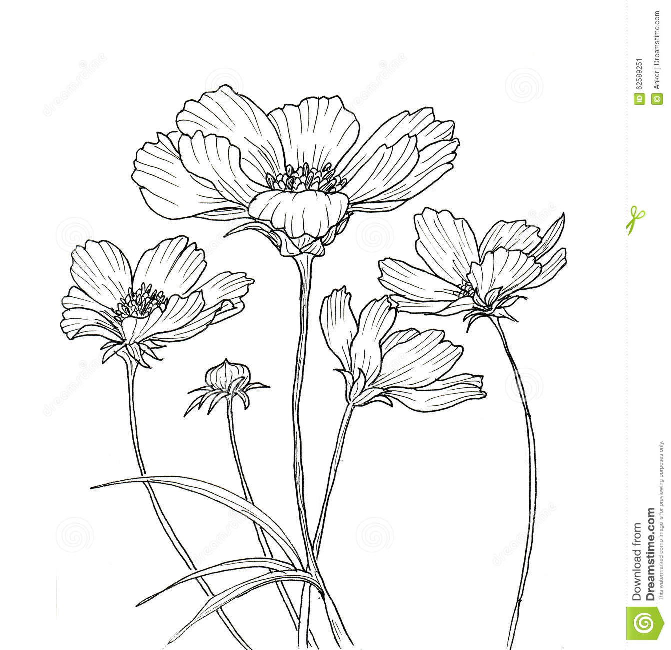 Line Art Flowers Images : Line ink drawing of cosmos flower stock illustration