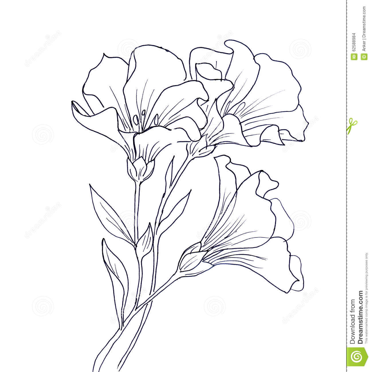 Black Line Flower Drawing : Line ink drawing of flower stock illustration