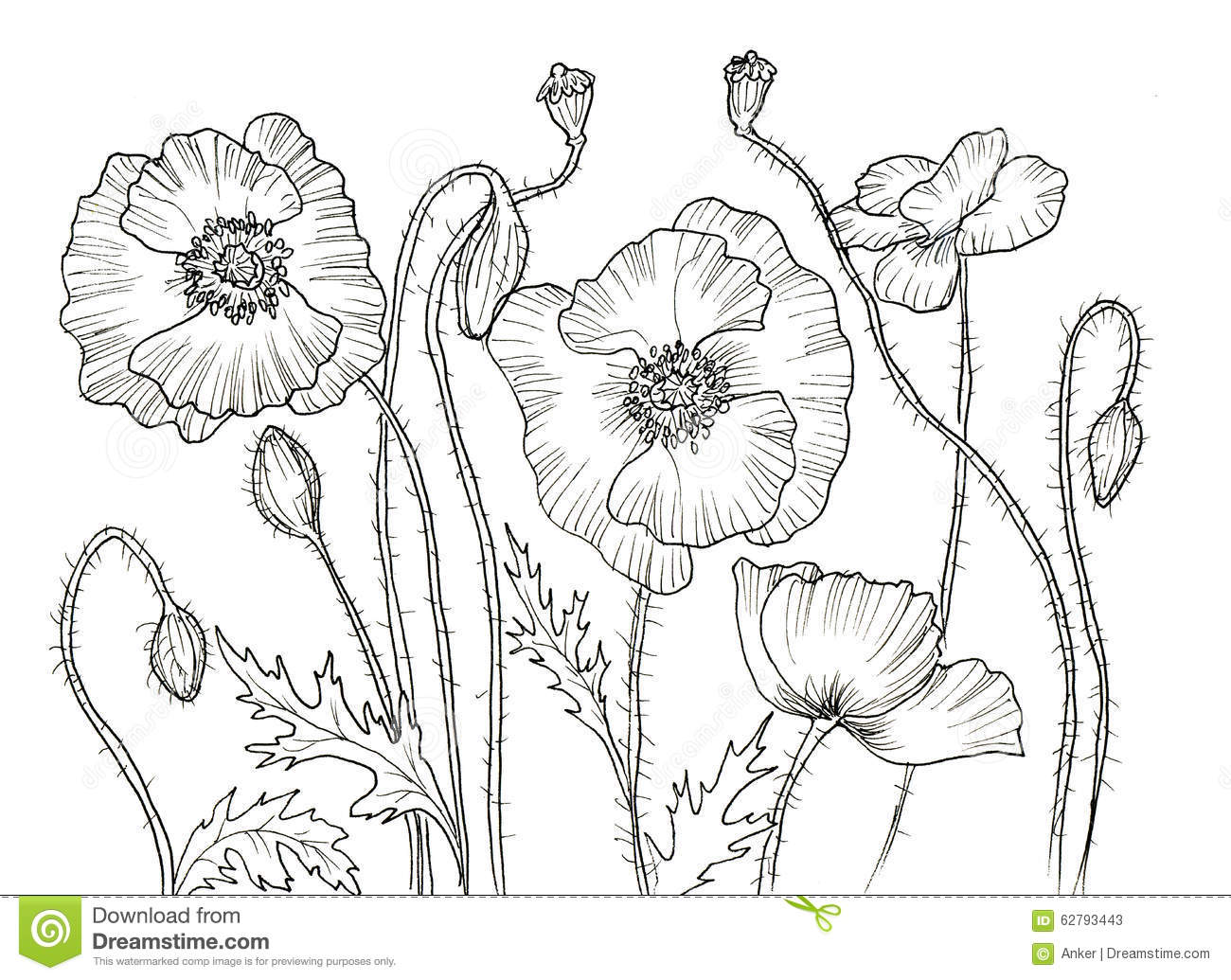 Contour Line Drawing Of A Flower : Line ink drawing of flower stock illustration image