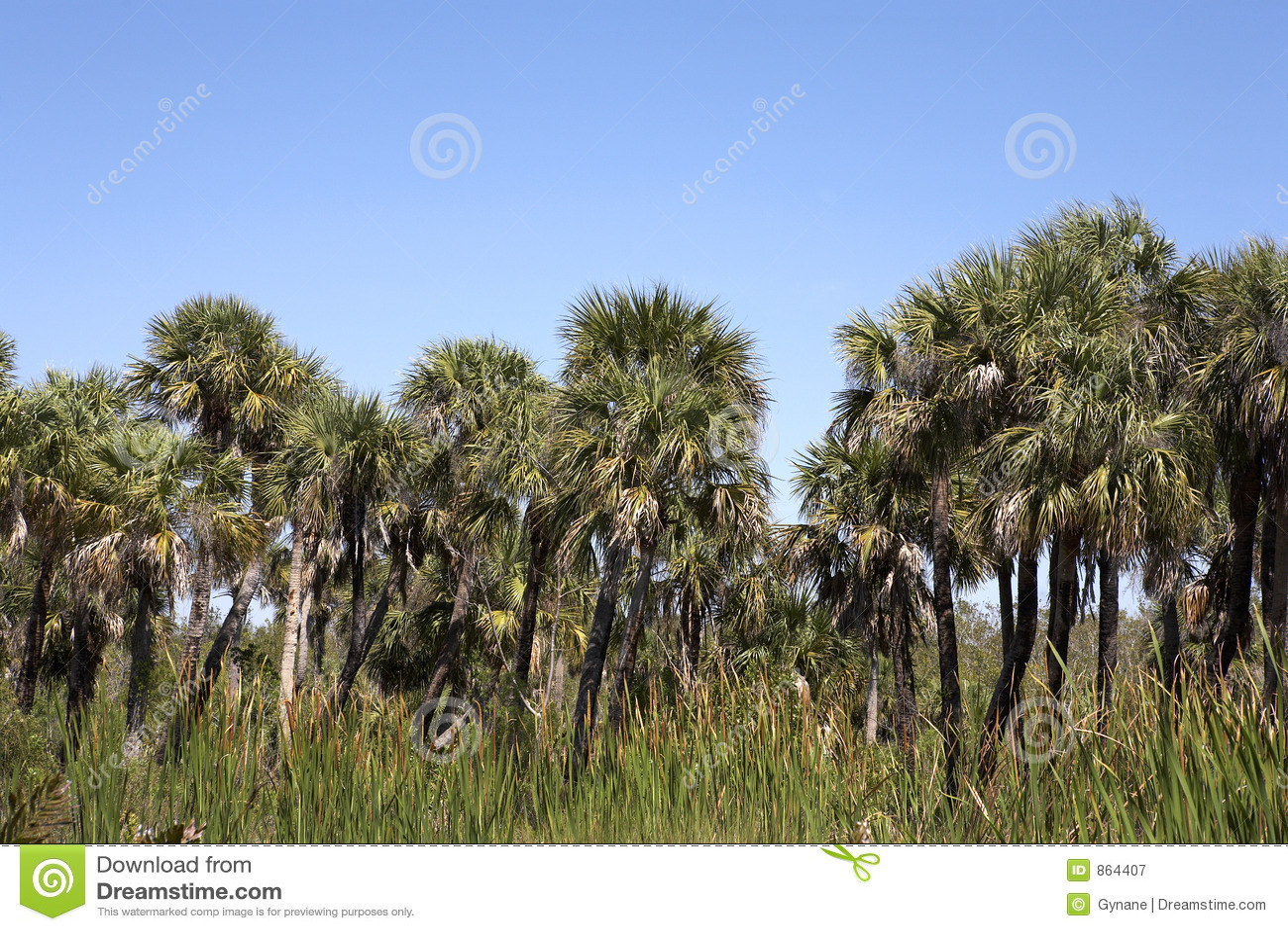 Line palm tree view