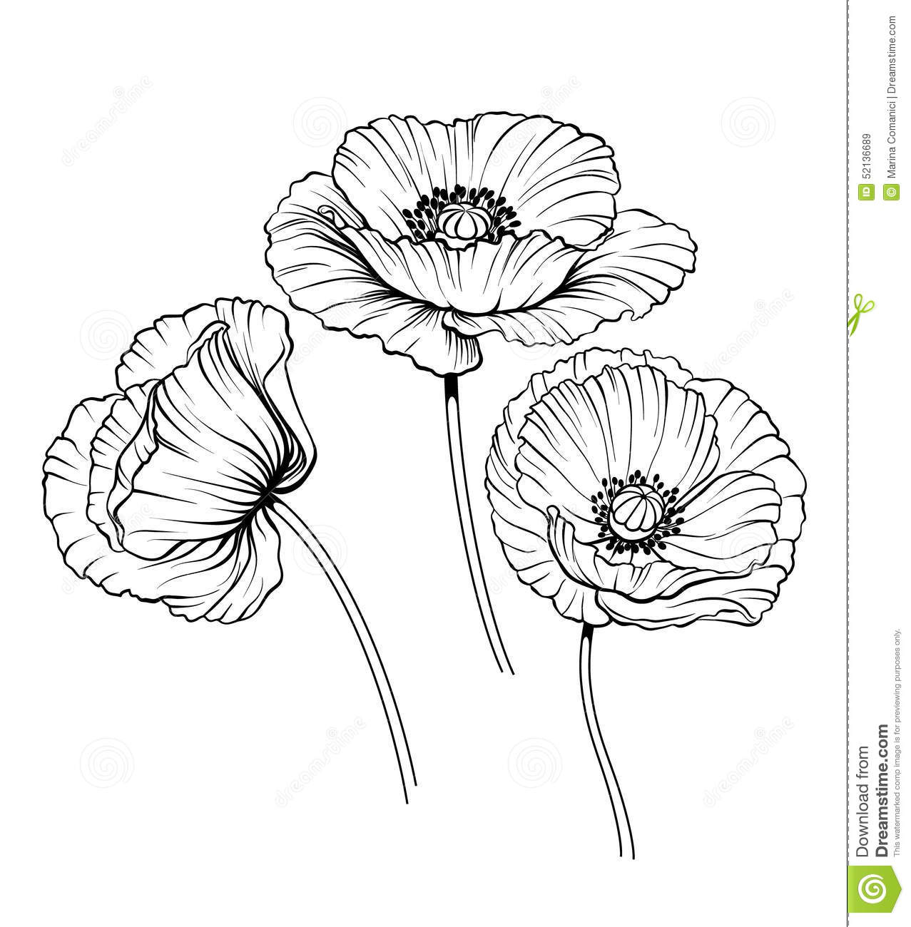Line Drawing Flower Vector : Line poppies vector set stock illustration of